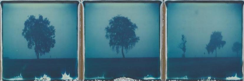 misty morning in blue by Ina Echternach  https://www.instagram.com/p/BLvvCQmBxTj/