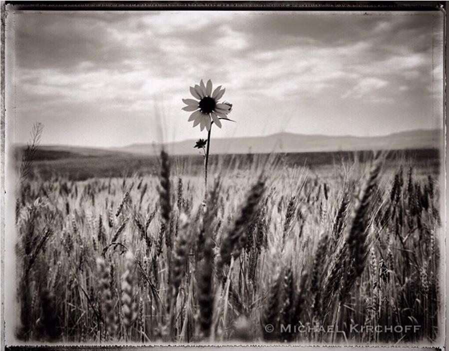 'Sunflower, Colorado' by Michael Kirchoff  https://www.instagram.com/p/BLo5kR2lfIl/?taken-by=michaelkirchoff