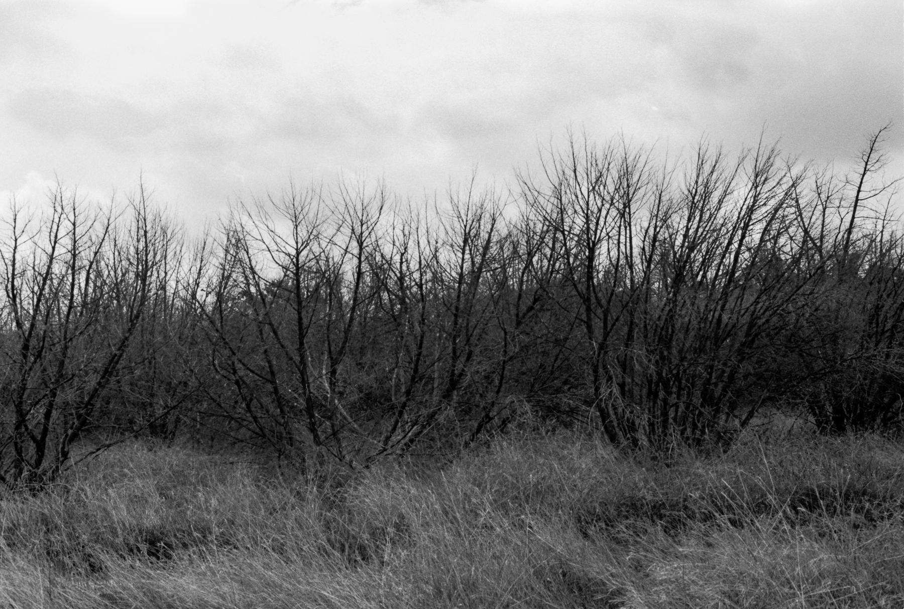 texas-photographer-film-04.jpg
