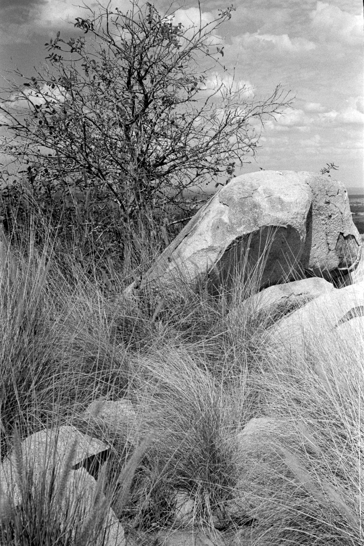 Rocks and Spinifex