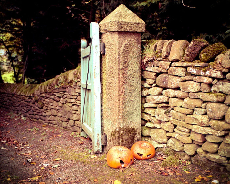Dead Pumpkin | Leica M6 | 35mm | Portra 160 | russell jones-davies