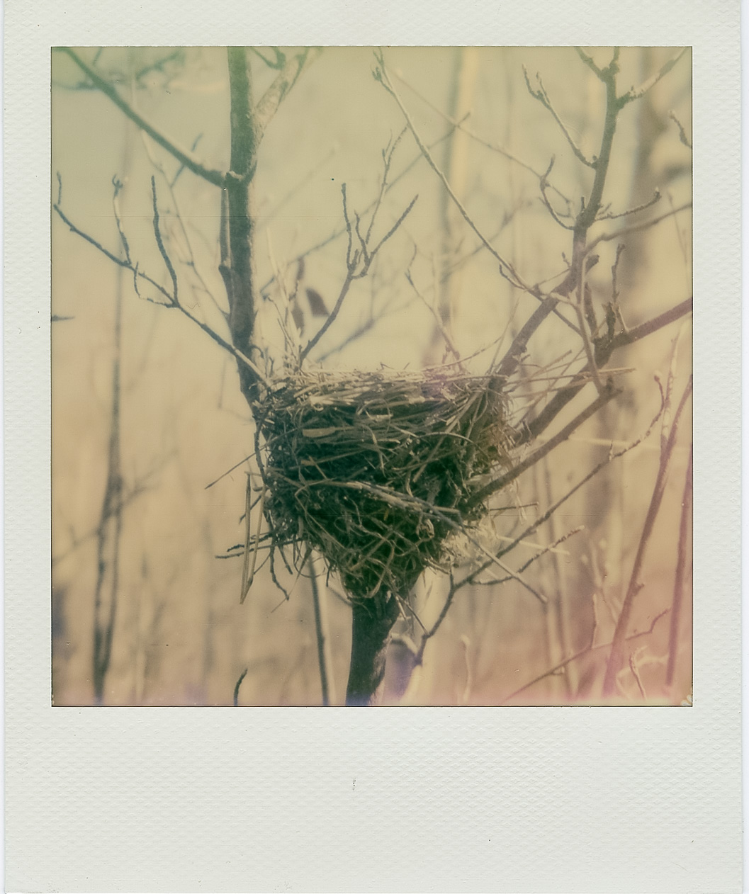 Nest | Polaroid SX70 | Impossible Film | Todd Connaghan