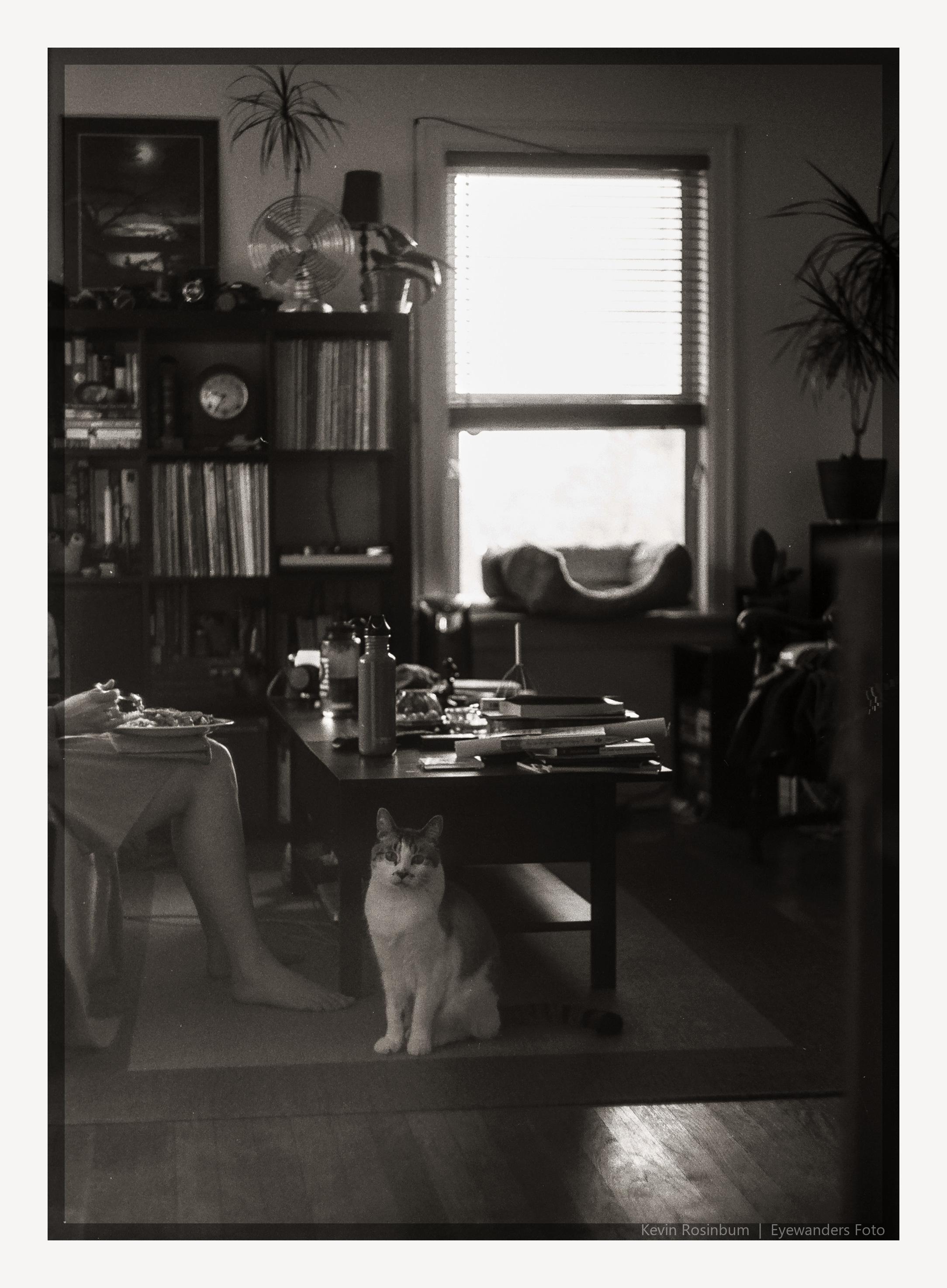 Still Life At Home With Ishmael | Kiev4M | Helios 103 | Ilford FP4 Plus | Kevin Rosinbum