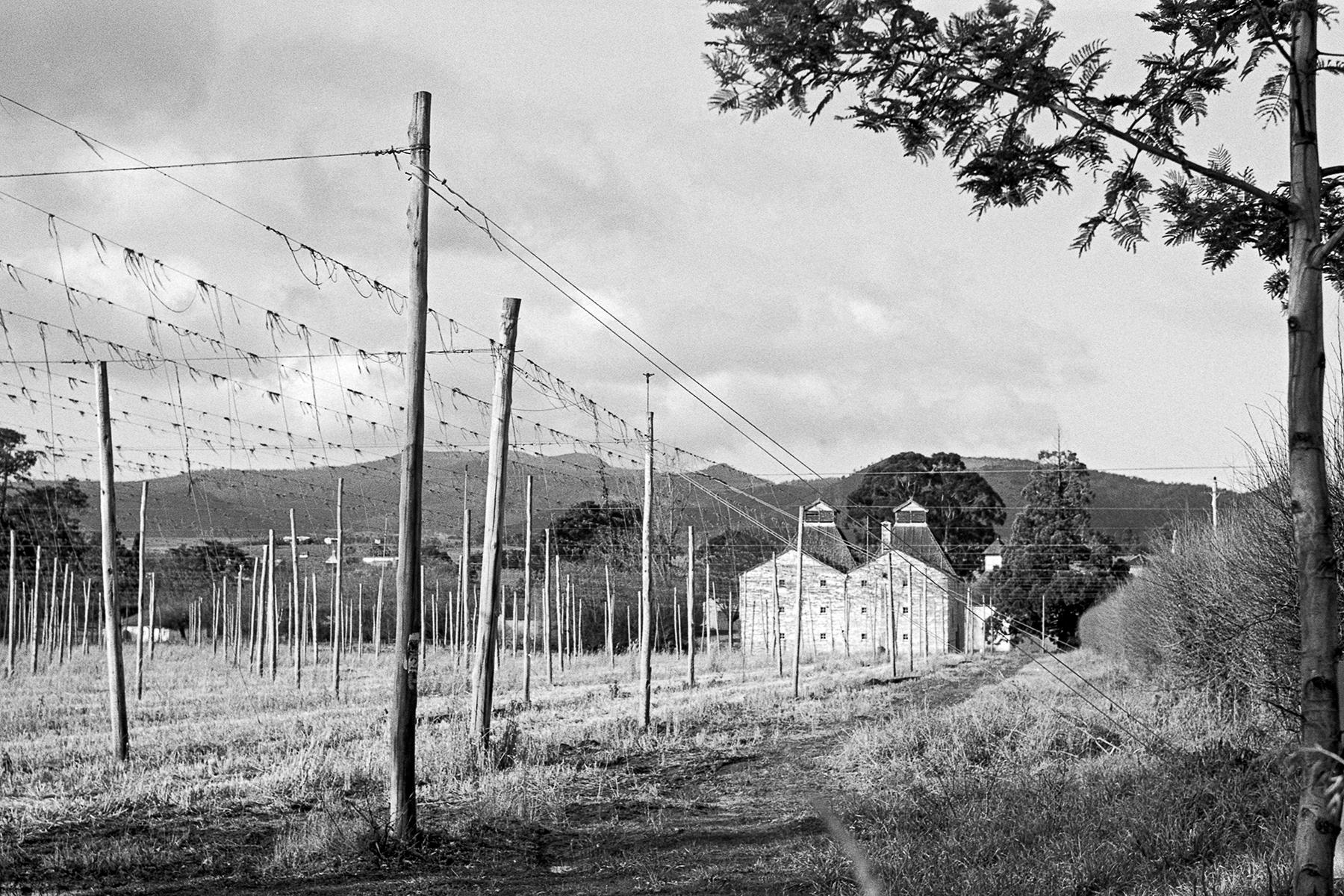 Hops Field Tasmania | KW Praktina FX | Carl Zeiss Jena 58mm f2 Biotar | Fujifilm Neopan Acros 100, developed in Ilford ID-11 1+3 | Brett Rogers