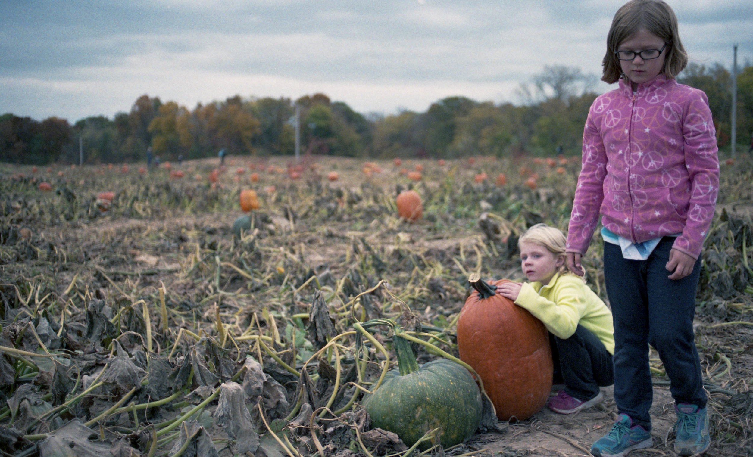 Brad Lechner | Pumpkin Patch | EOS 650 | Zeiss Flektagon 35mm f2.4 | Fuji Natura
