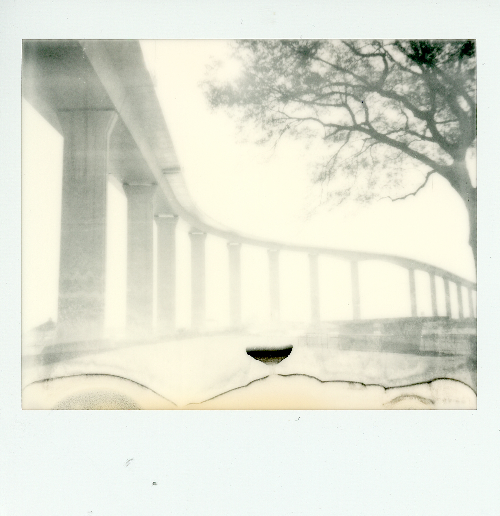 Journey Tree | Polaroid Spectra | Impossible Film | Victor Perrotti