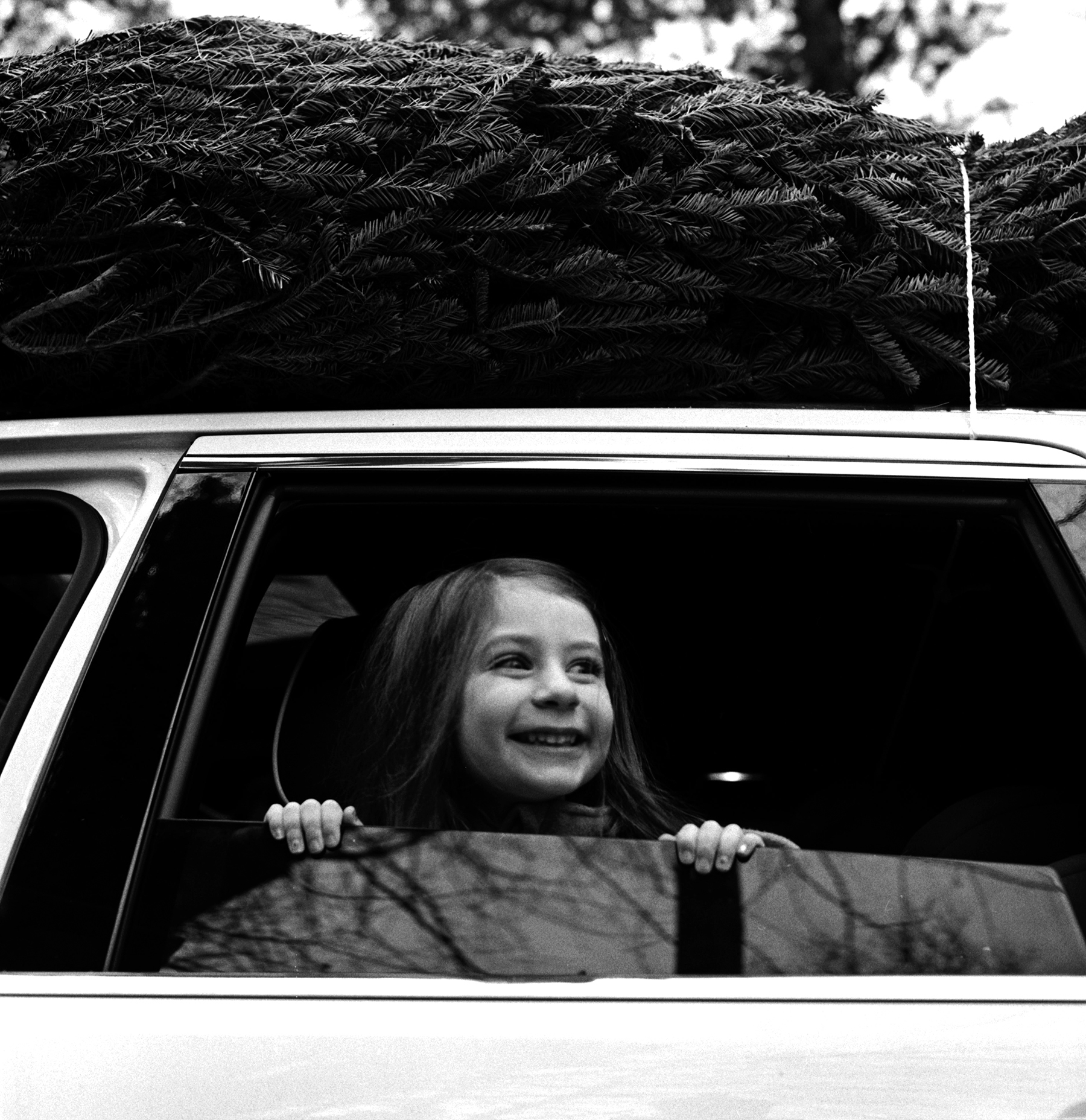 Bringing Home the Tree   Hasselblad 500 CM   Ilford HP5+   Ellen Goodman