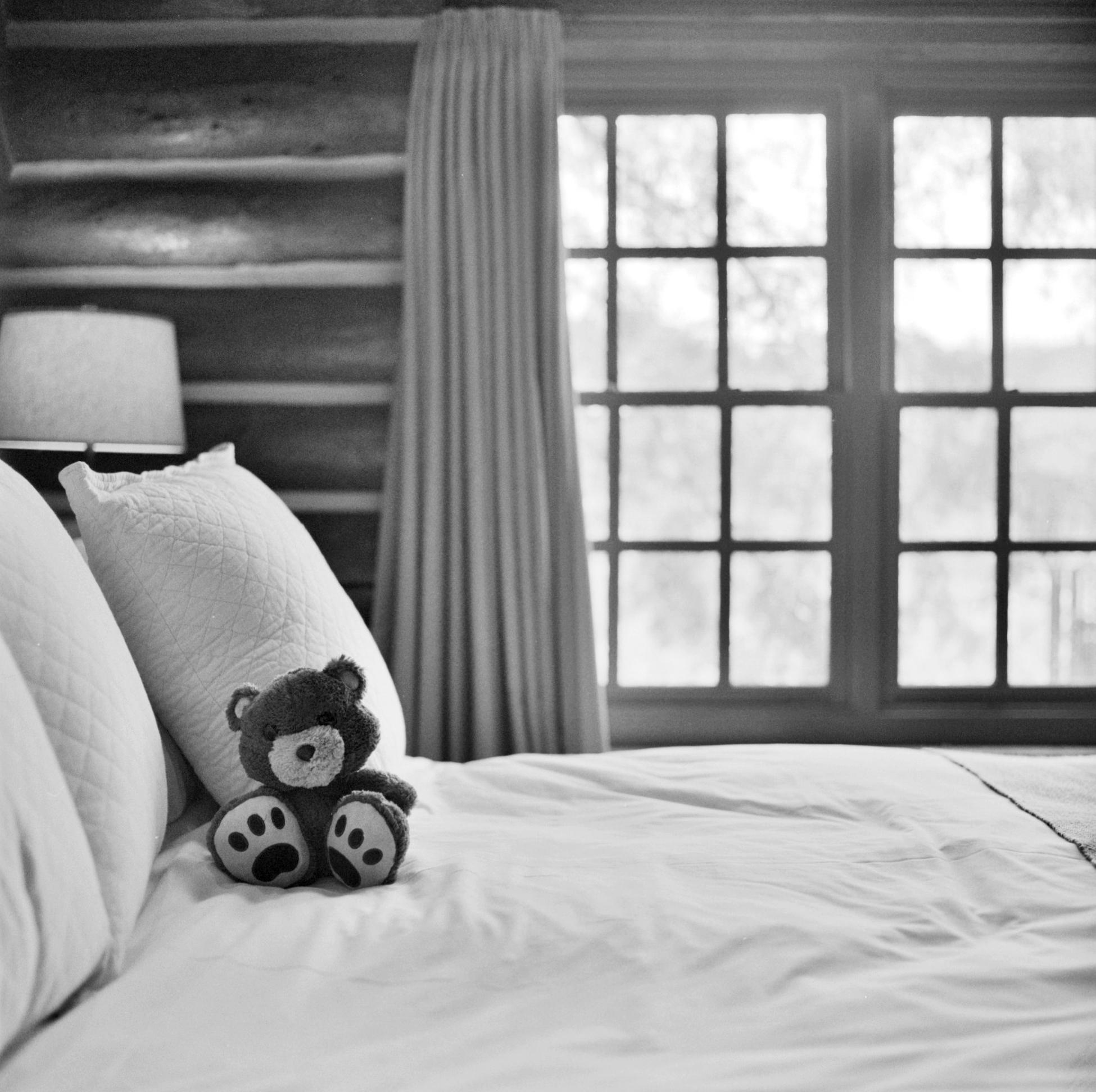 Traveling Teddy, Big Cedar 2015   Hasselblad 500 CM   Ilford HP5+   Ellen Goodman