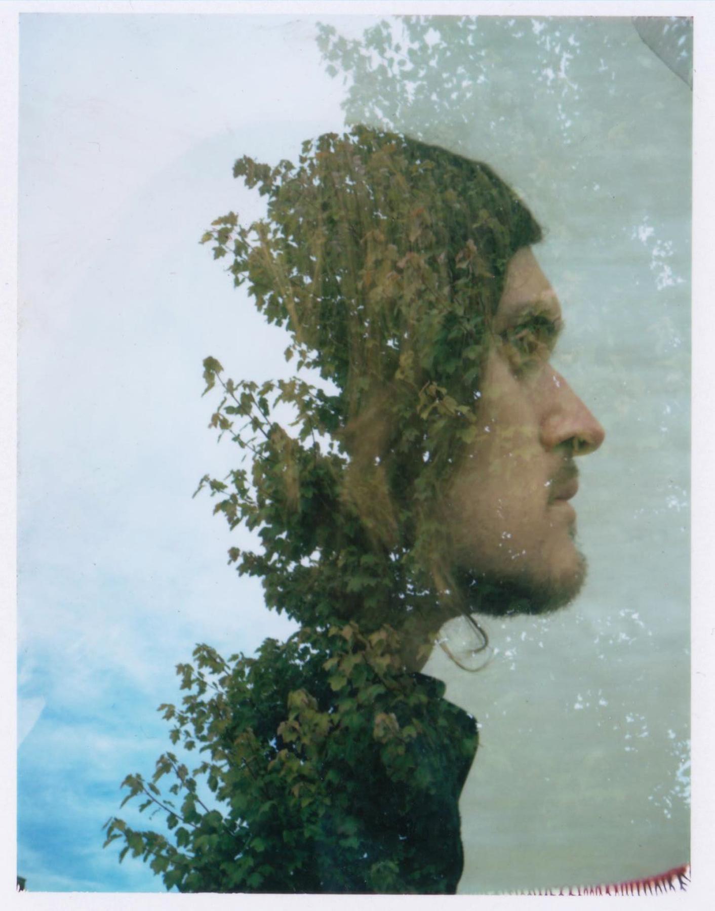 Abigail Crone | Into The Trees | Polaroid 230 Land Camera | FP-100C