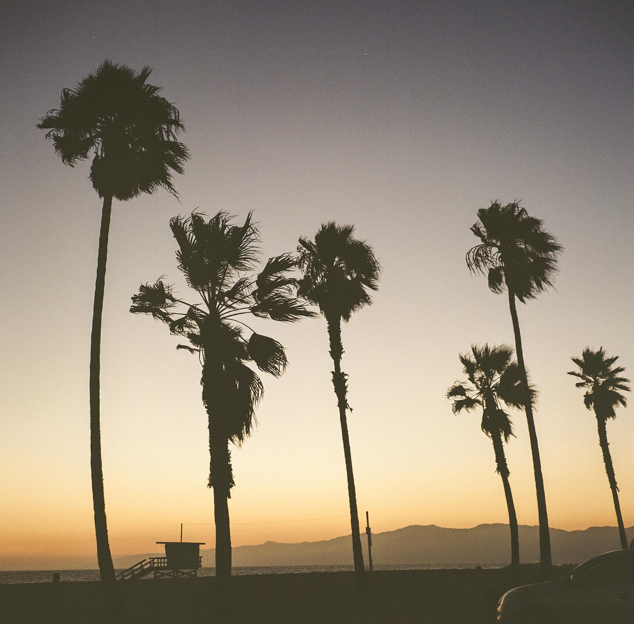 Venice Beach | Rolleiflex 3.5 Planar | Portra 400 | Tony Klimas