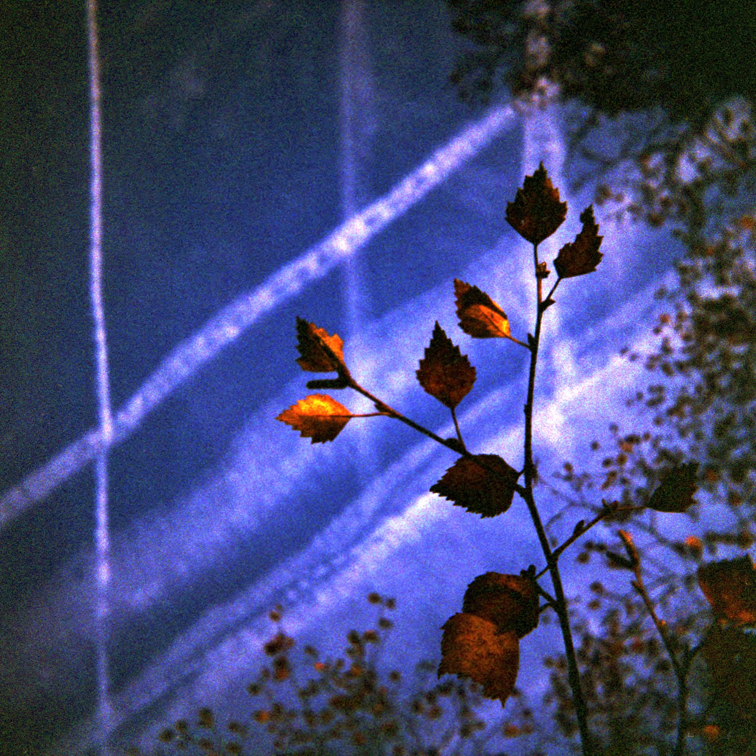 Leaves and Lines | DianaF | SuperWide 38mm  | Lomography 800 | Lucy Wainwright