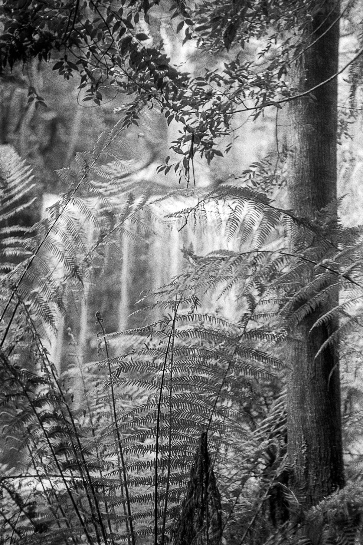 Waterfall, Tasmania |1936 Contax II RF |Zeiss 50mm Sonnar f1.5 |Kodak Tri-X |Brett Rogers