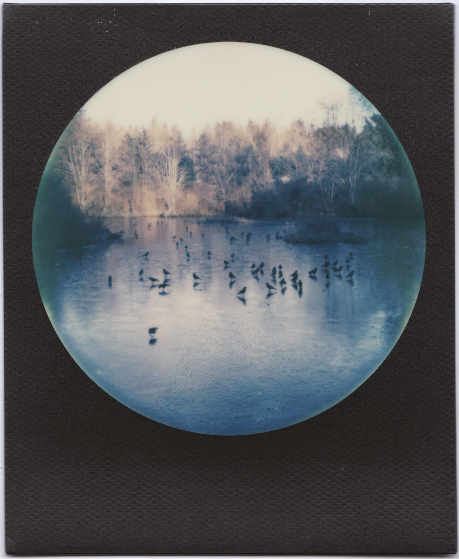 Crows On Ice | MiNT SLR 670S | Dave Morgan