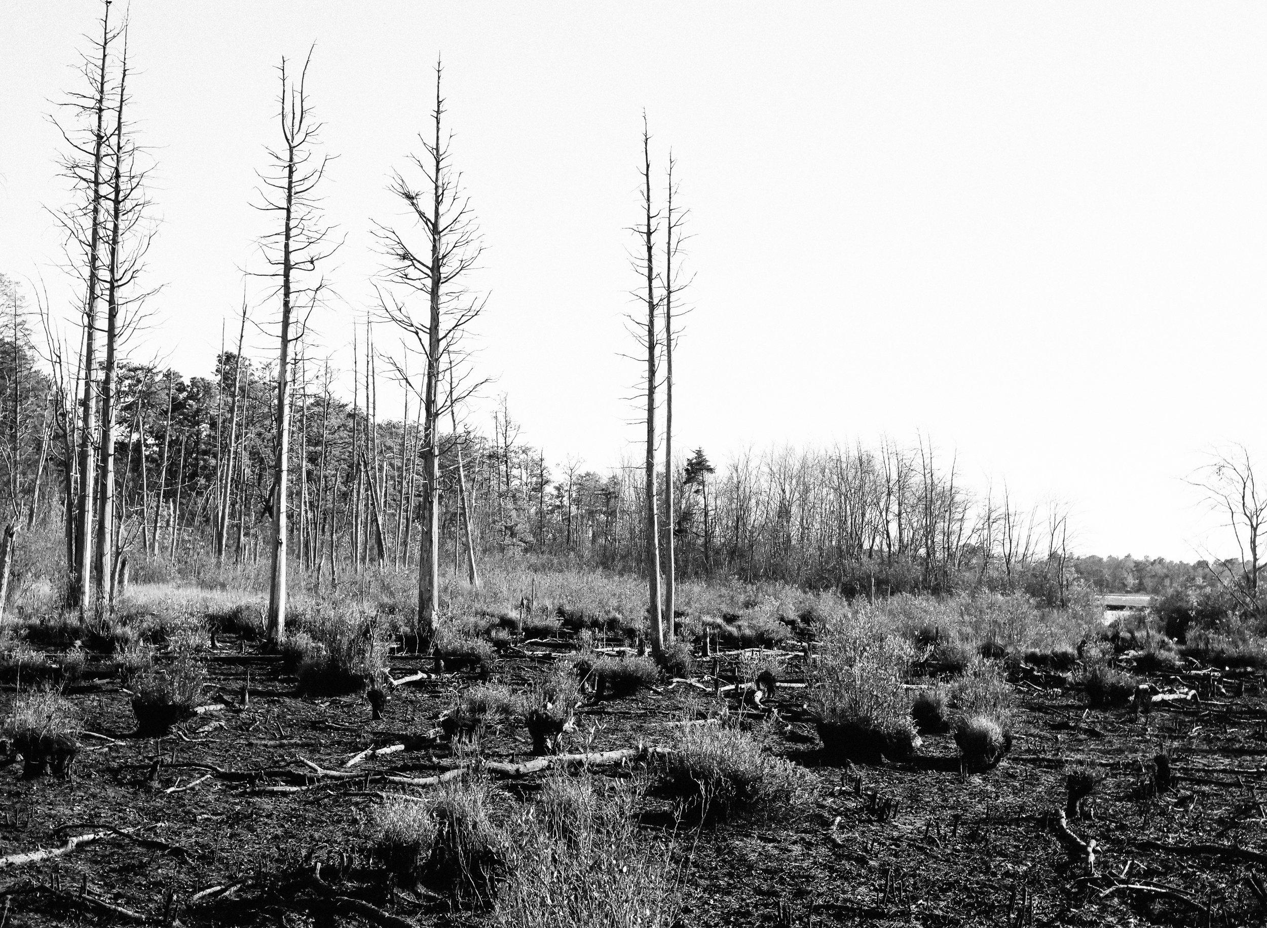 wasteland |Pentax 645N |SMCPentax FA 645-75mm F2.8 |Kodak T-Max 100 |Michael Fauscette