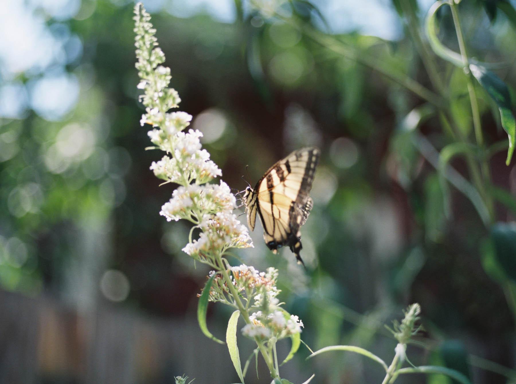 a kaliedoscope of butterflies.jpg