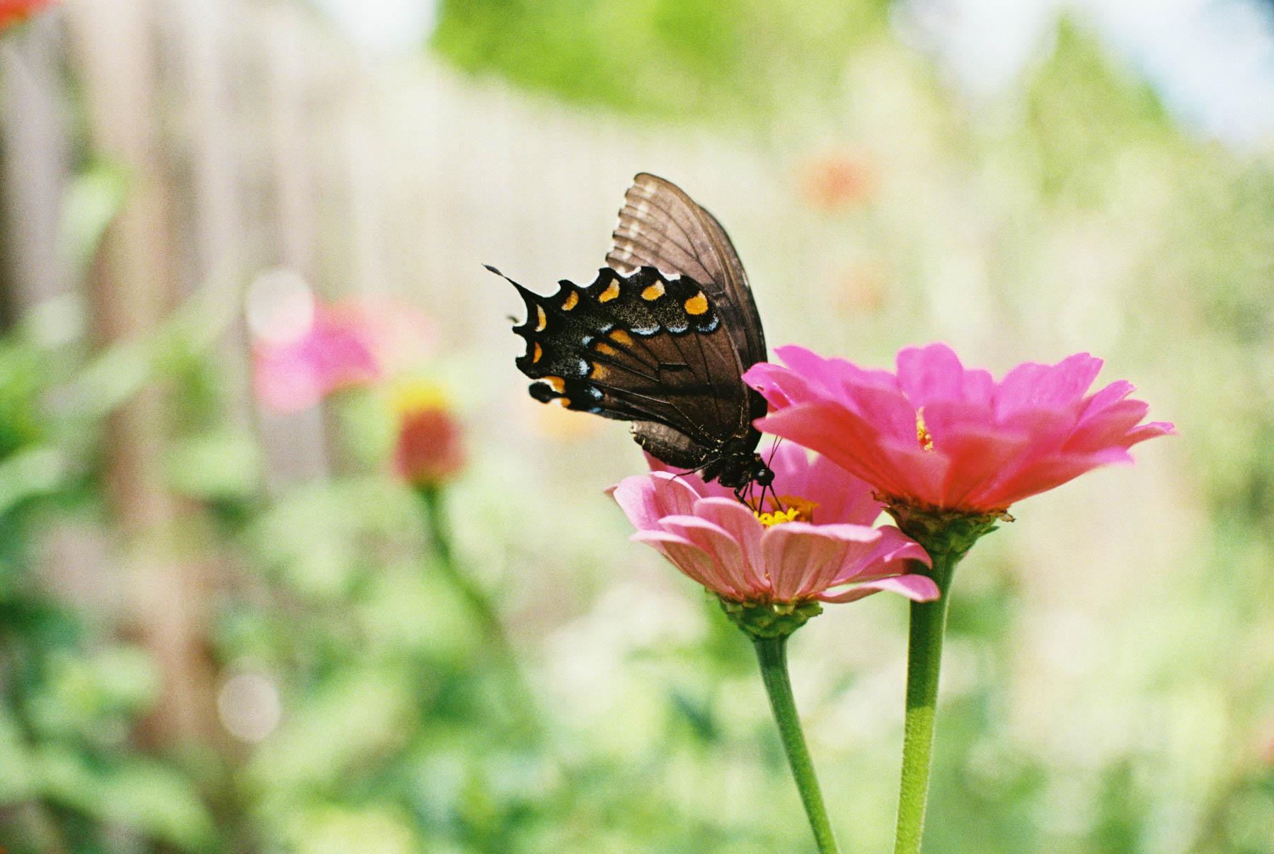 a kaliedoscope of butterflies-2.jpg