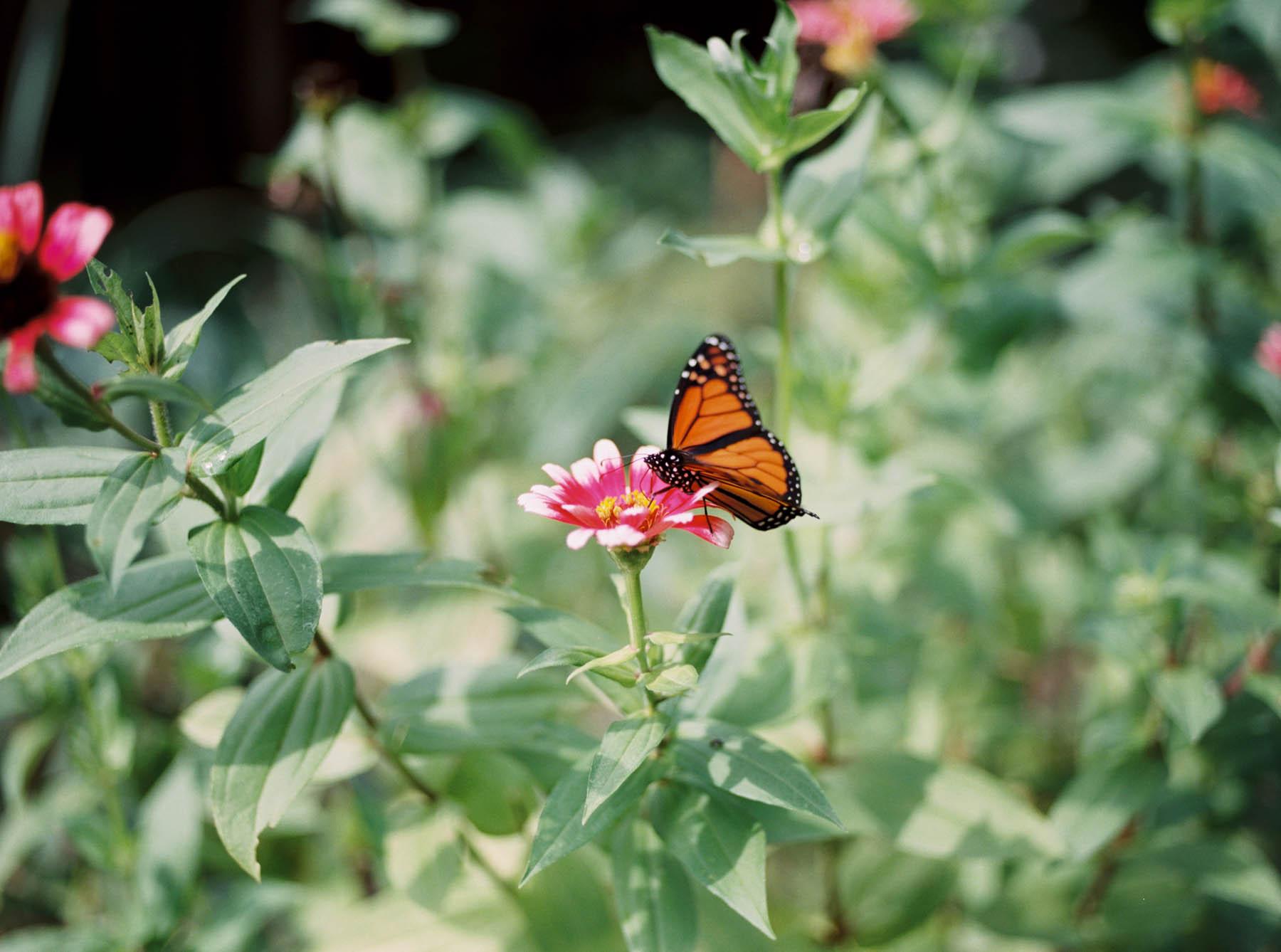 a kaliedoscope of butterflies-8.jpg