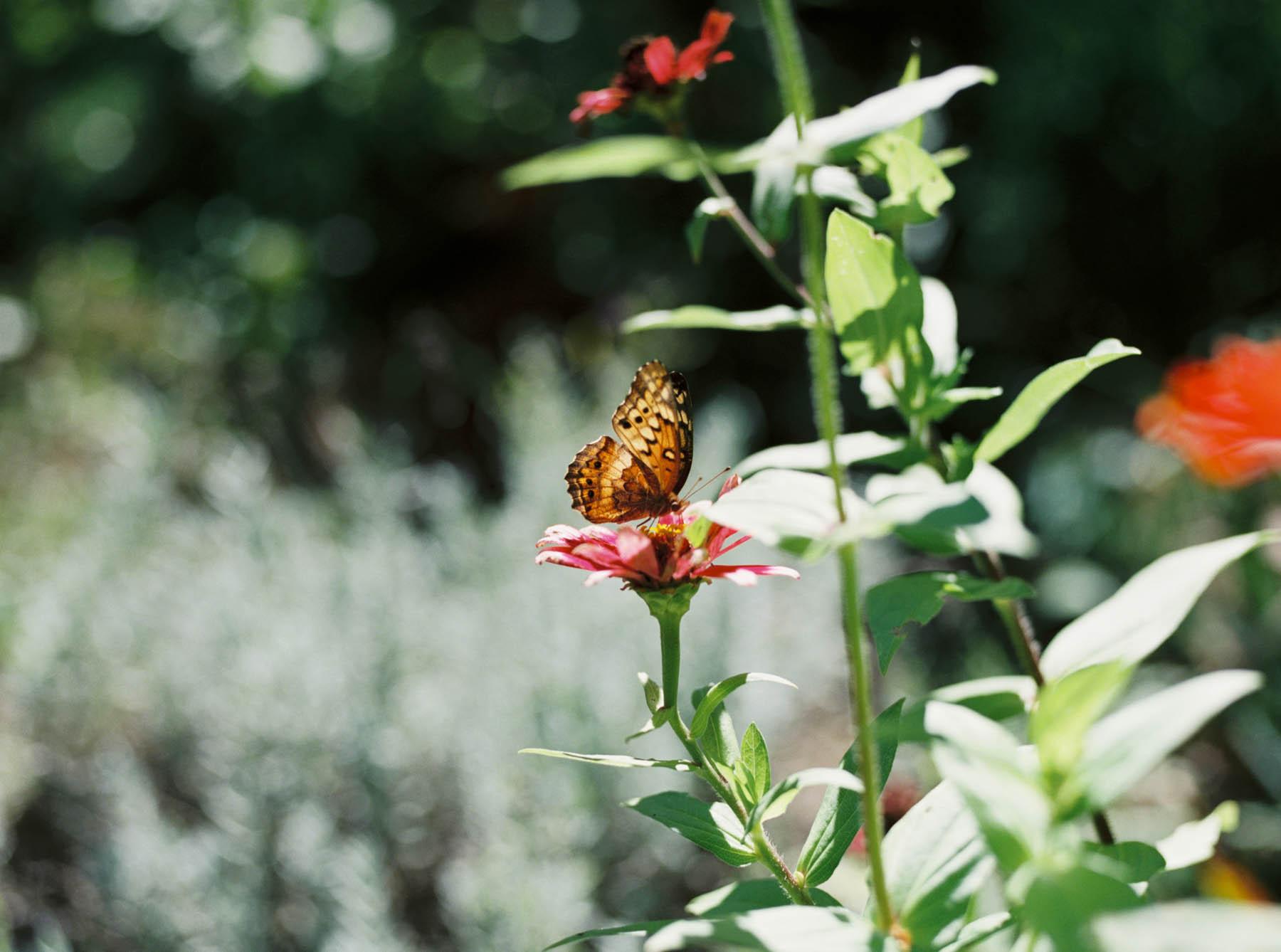 a kaliedoscope of butterflies-9.jpg