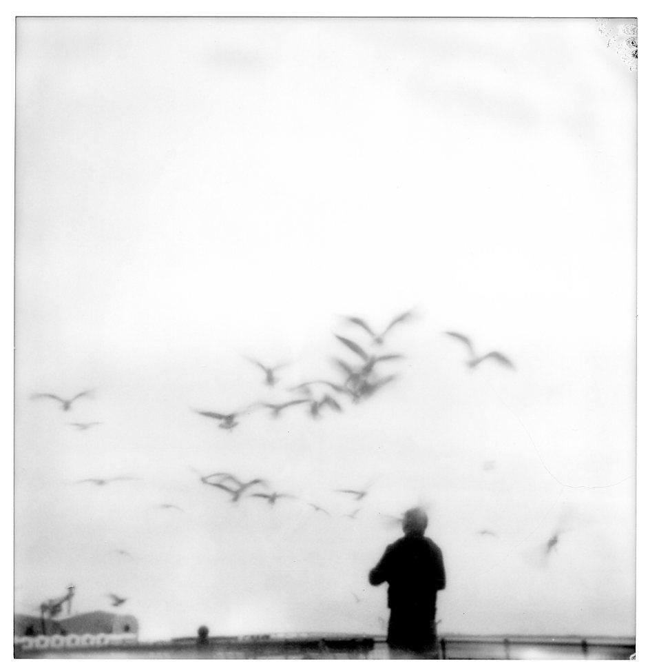The Flock Returns the Love | SX70 | Mandy Thomas Carey