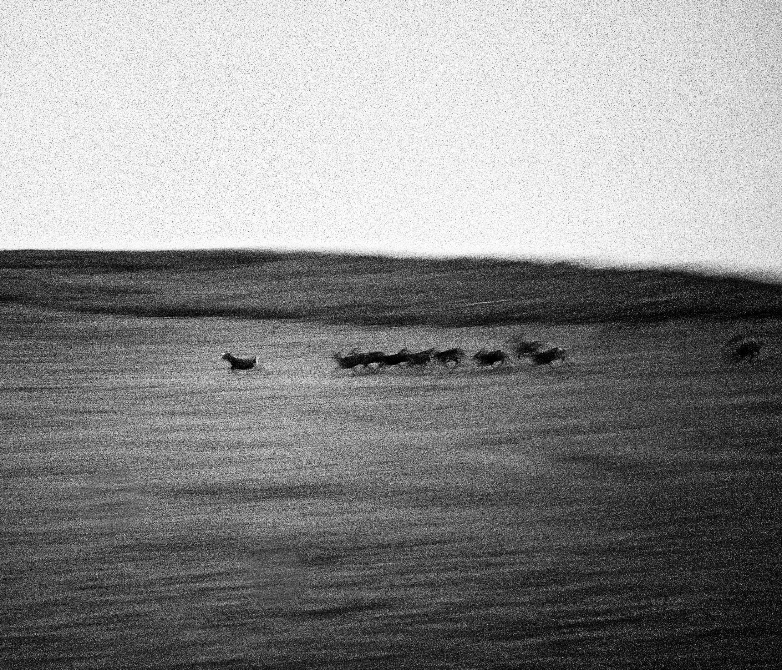 Nara Deer | Mamiya 7II | Ilford HP5+ | Cameron Kline