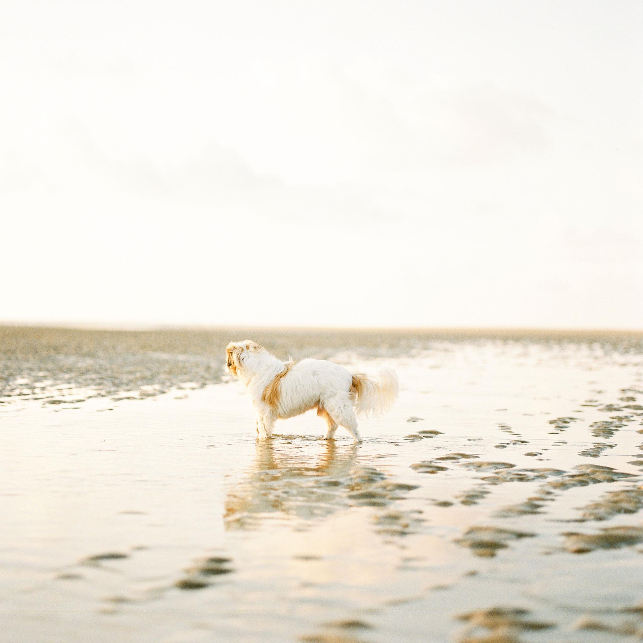 Nils Karlson | The Sigh Of Summer | Mamiya RZ67 - 110mm | Portra 800