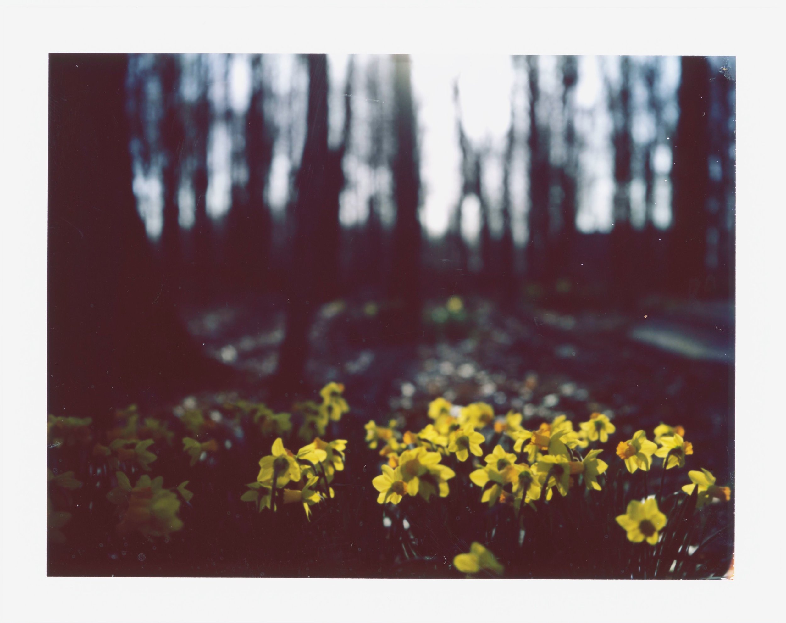 spring beginnings | Land camera | FP100c | tracey bos