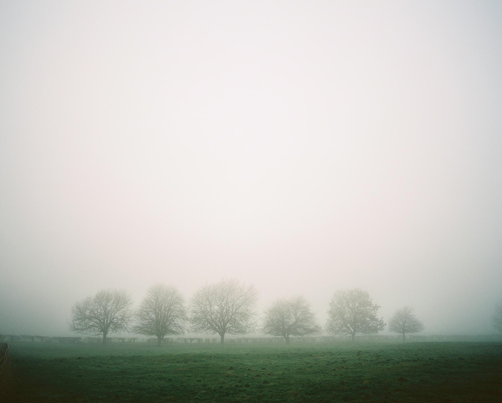 Trees | Pentax 67ii | Kodak Ektar | Mark Hillyer