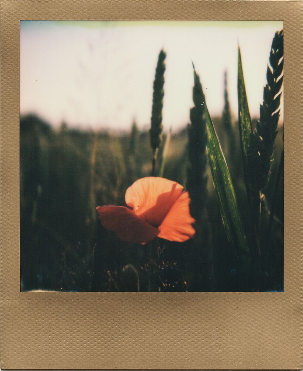 Poppy Love | Polaroid SX-70 Alpha | Impossible Project 600 film and ND filter | Karin Claus