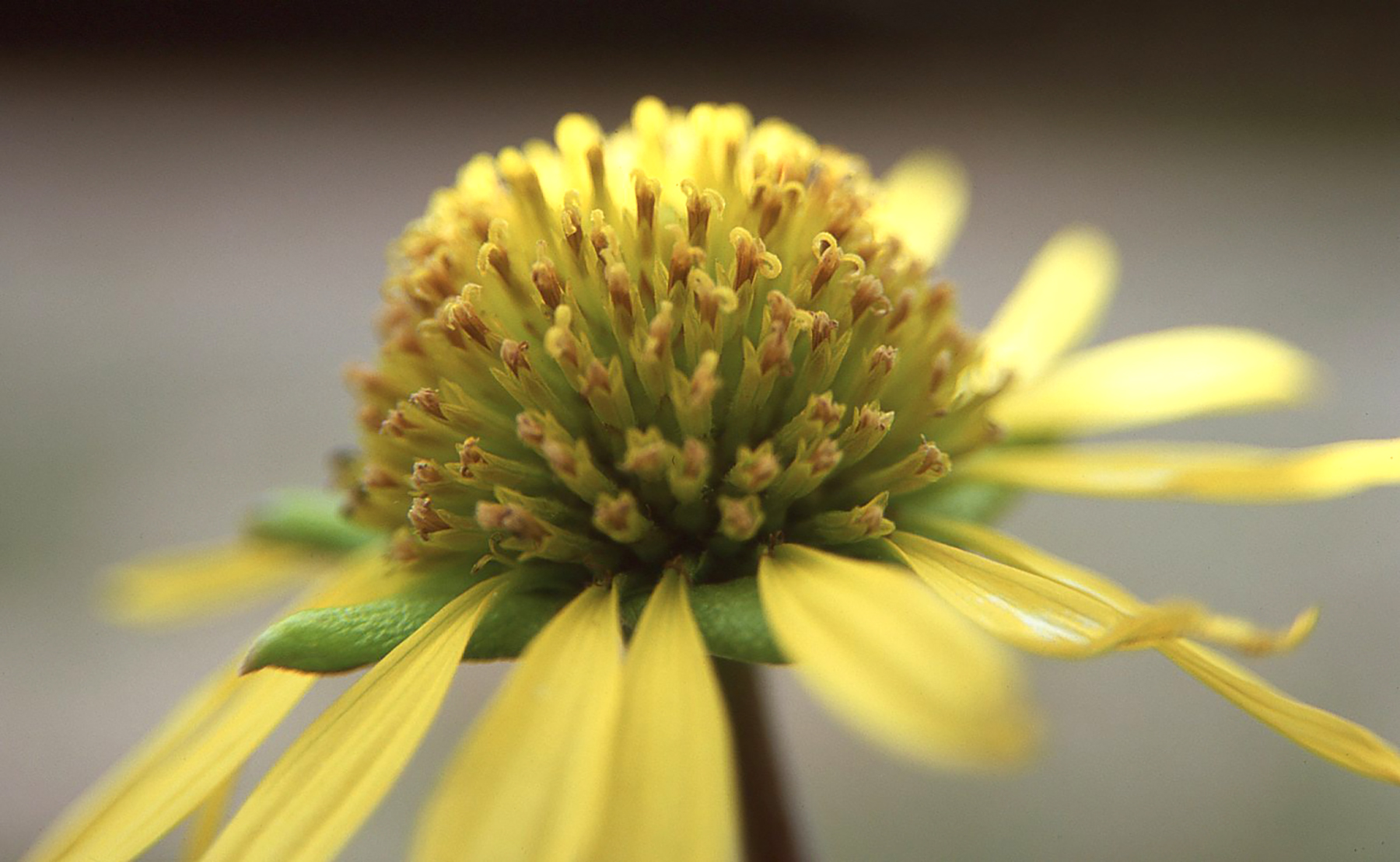 Texas Wildflower | Nikon N80 | Fuji Velvia 50 | Barbara Justice