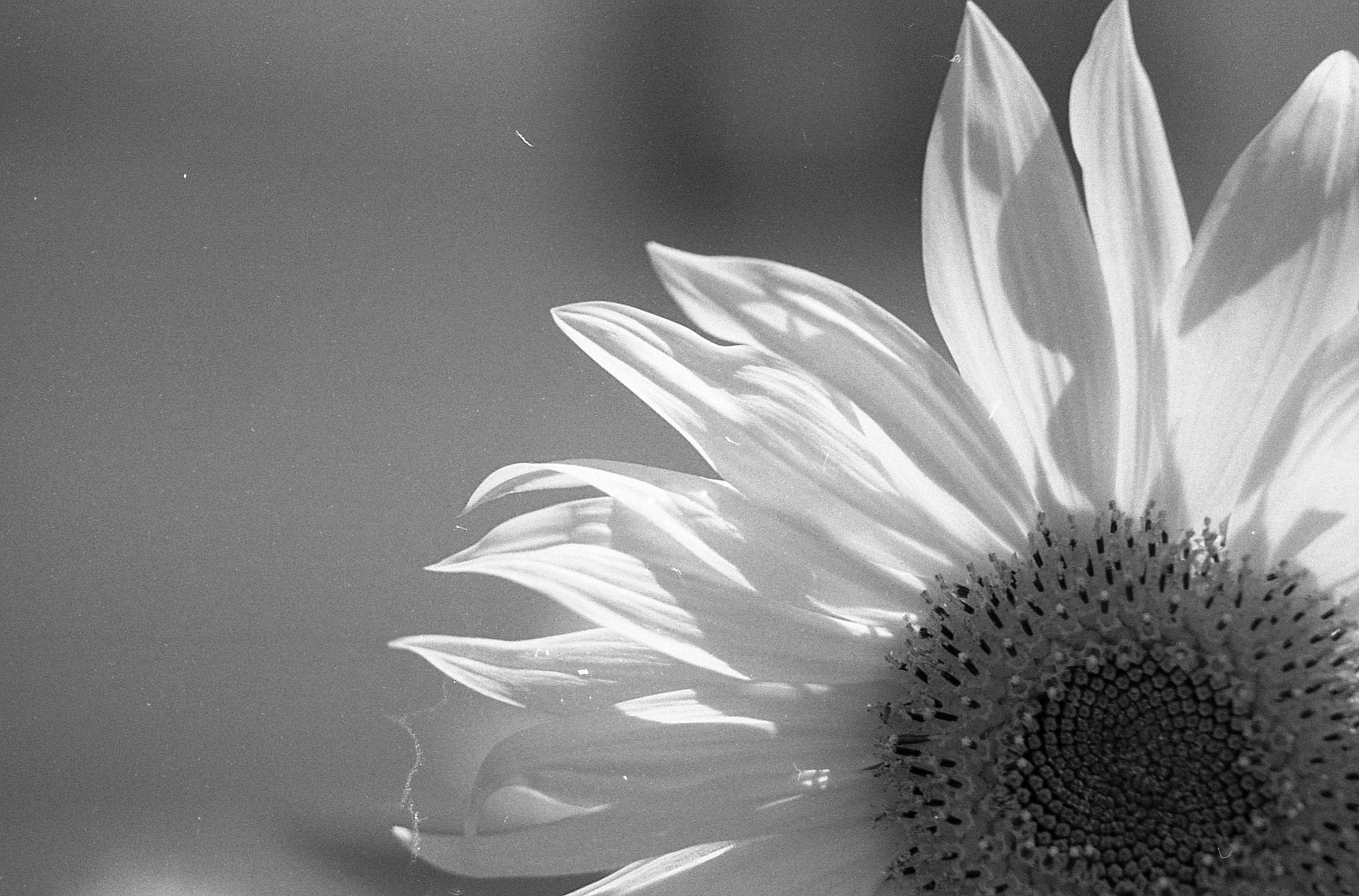 Here Comes The Sun | Pentax Spotmatic | Tri-X 400 | Kali Herdman
