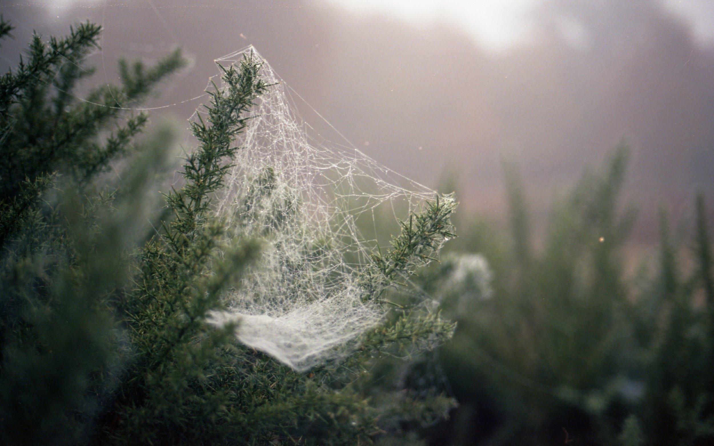 The Veil | Canon AE-1 Program | Kodak Ektar 100 | Katia Shipulina