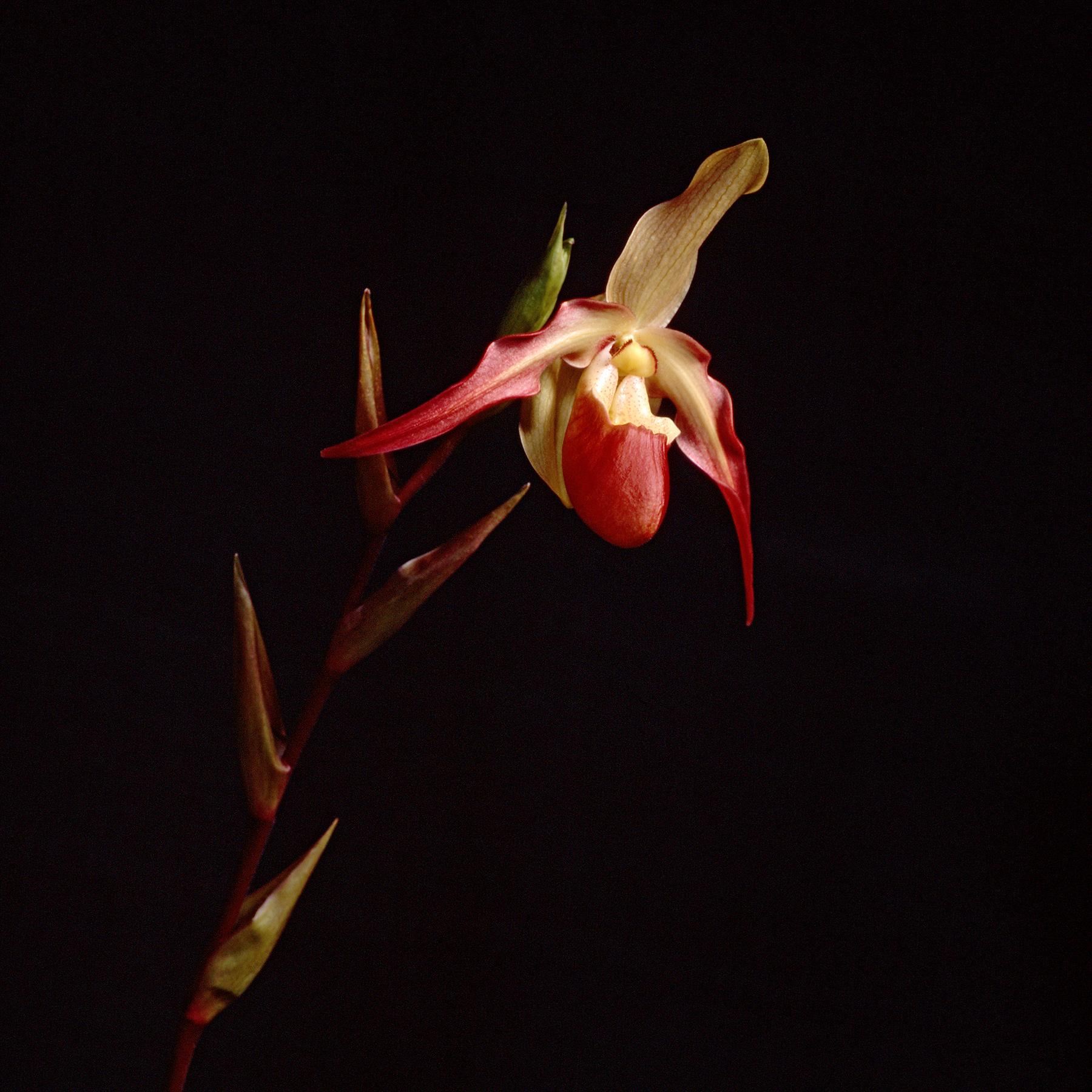Lady Slipper | Bronica SQA | 110mm lens | Fuji Provia | Howard Sandler