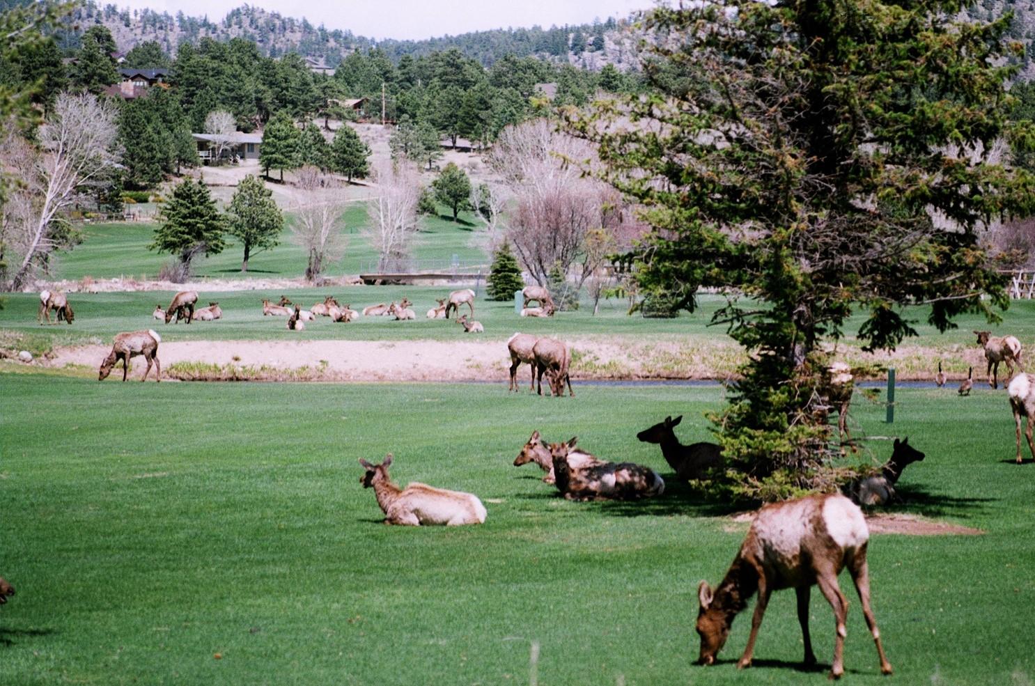 Jake Leininger | Golf Course Takeover | Topcon RE2 | Lomo400