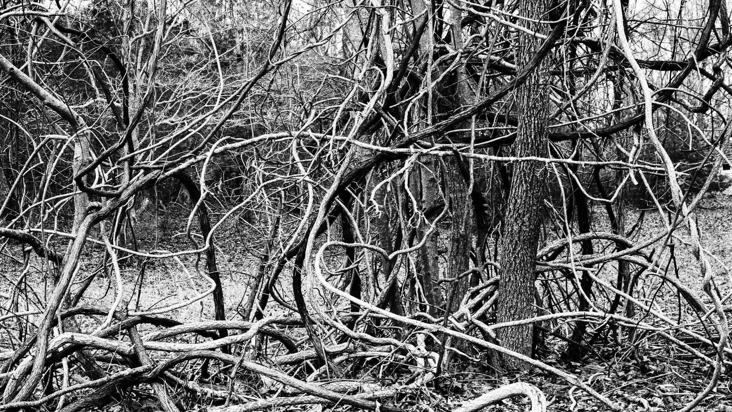 intertwined vines and the texture of trees | hasselblad | xpan cinestill xx | keith mendenhall