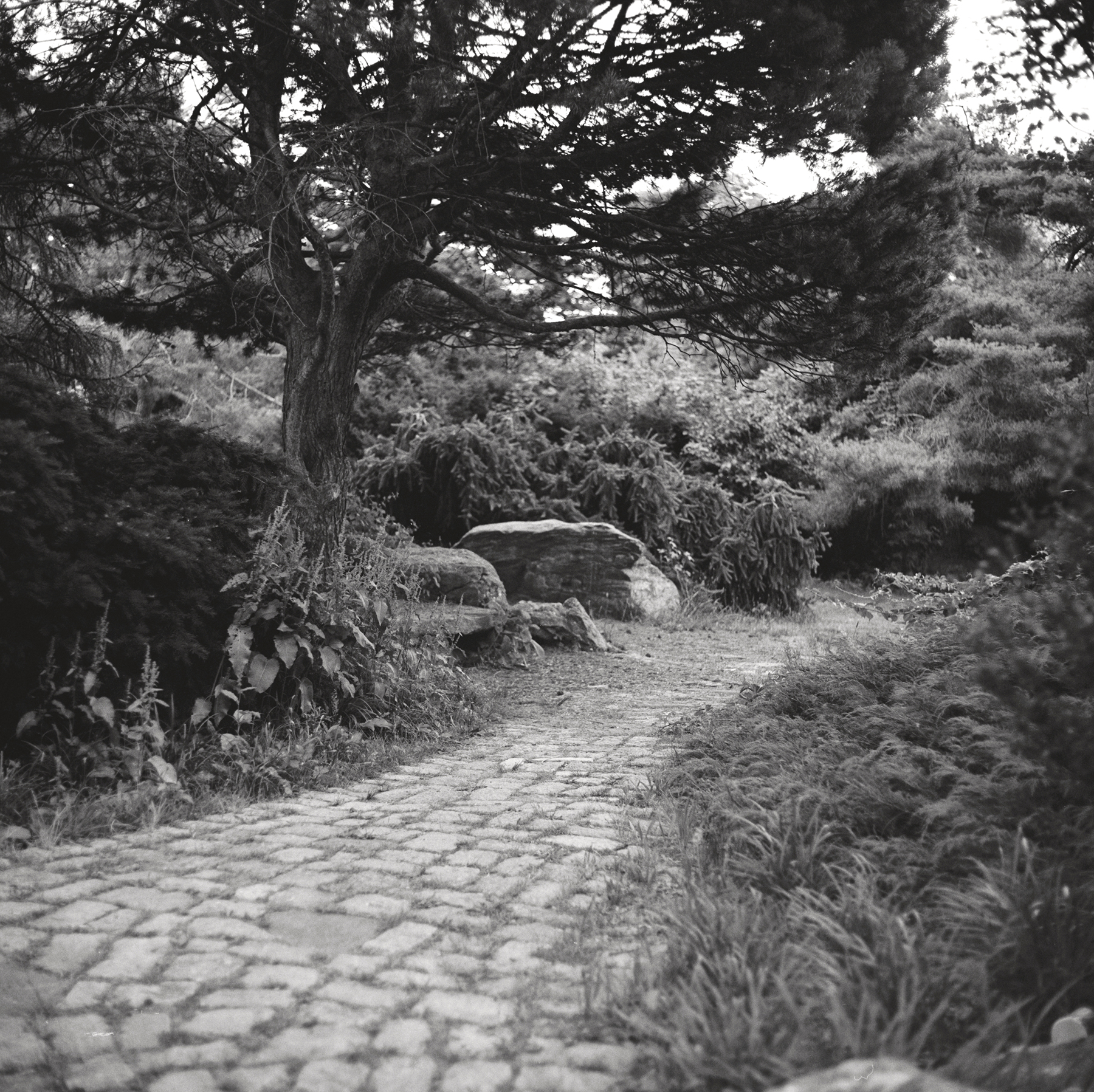 Japanese Garden Path | Kiev 60 | TMax 400 | Ian Ross