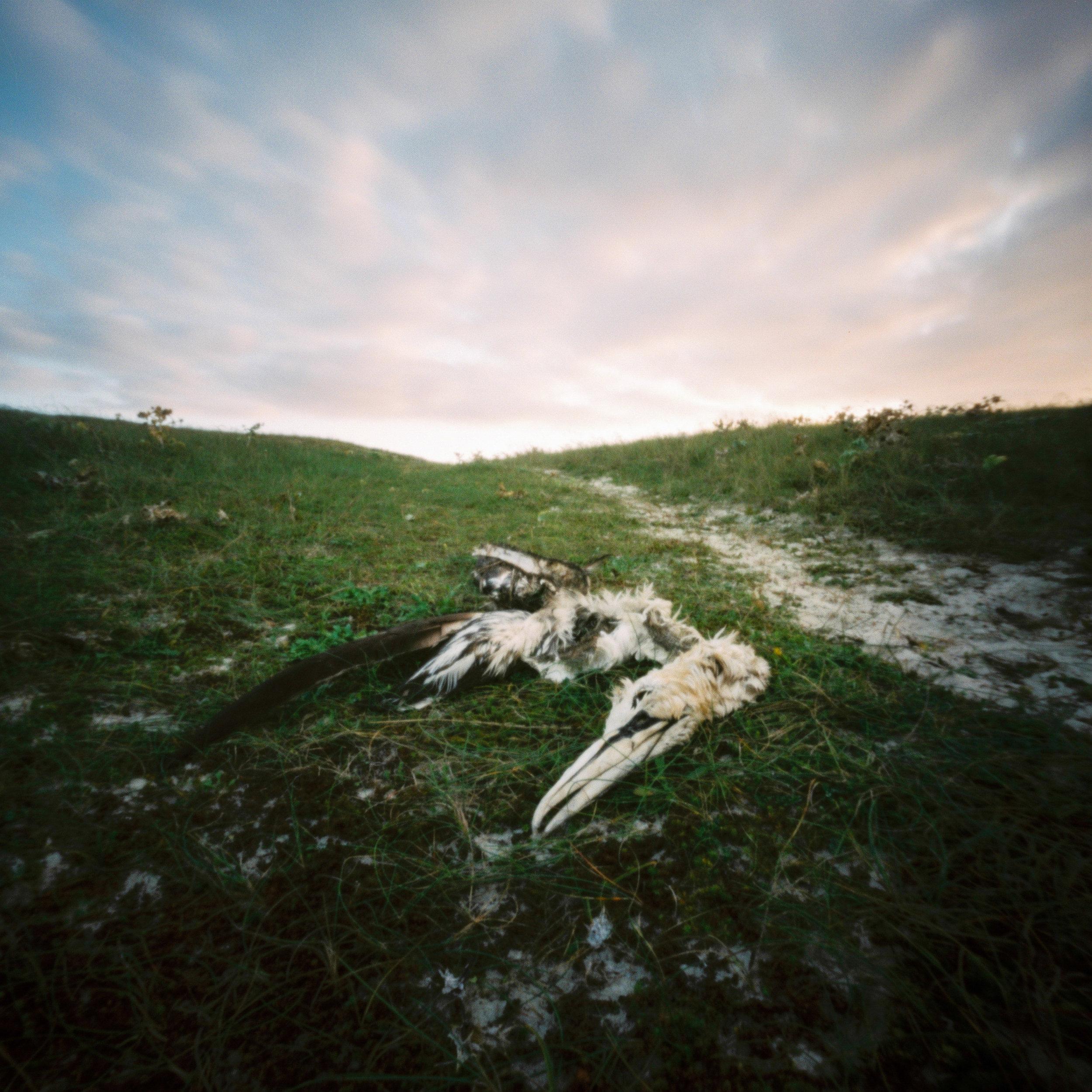 Nils Karlson | meet me when the suns stand still | Zero Image | Fuji 400h