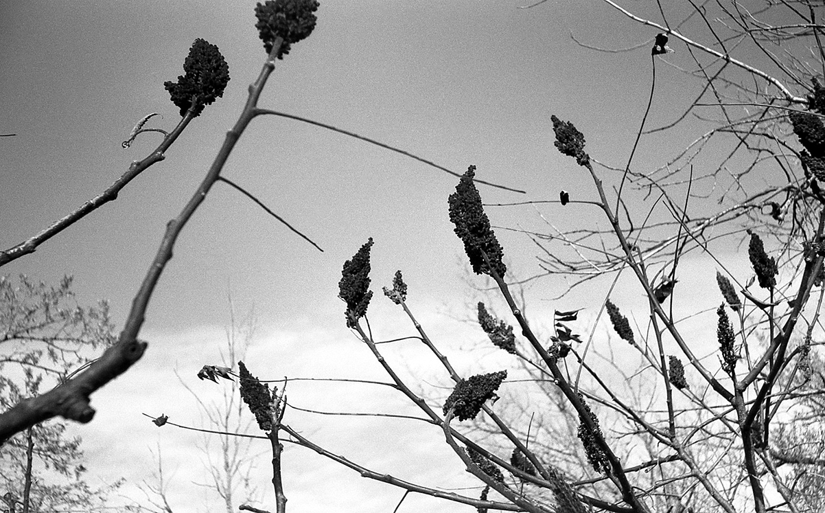 (3)ArgusC3_Kodak TMX 100 Exp. 2000.jpg