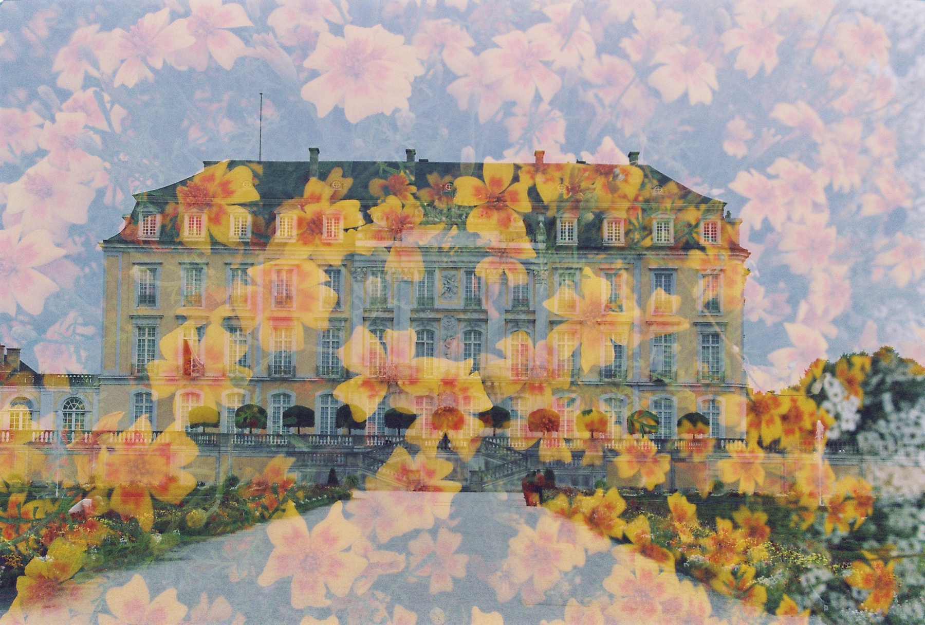 Flowered Manor   Nikon F801   Herr Filmkorn