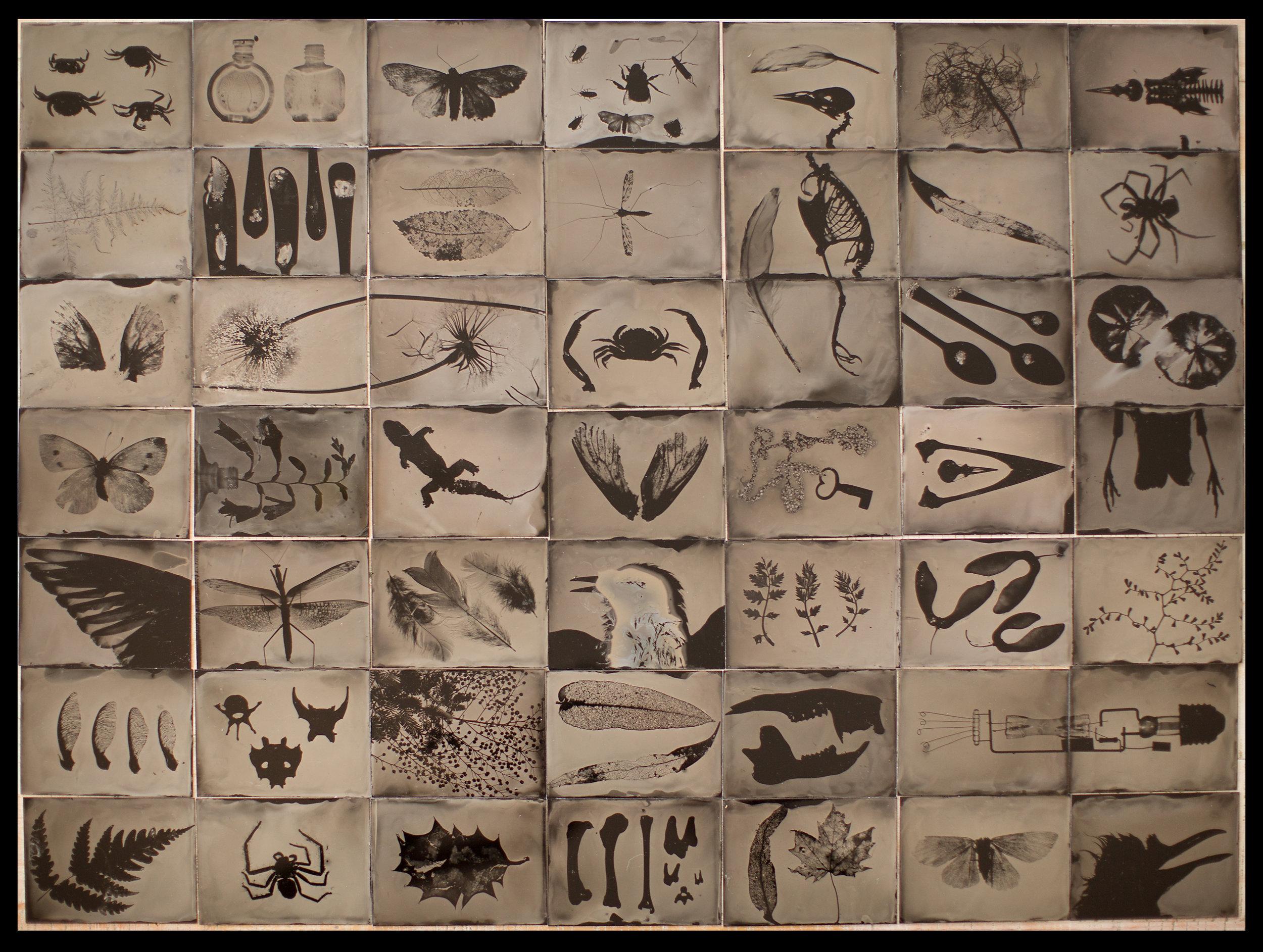 Odyssey | photograms | wet plate collodion | Steve Lovegrove