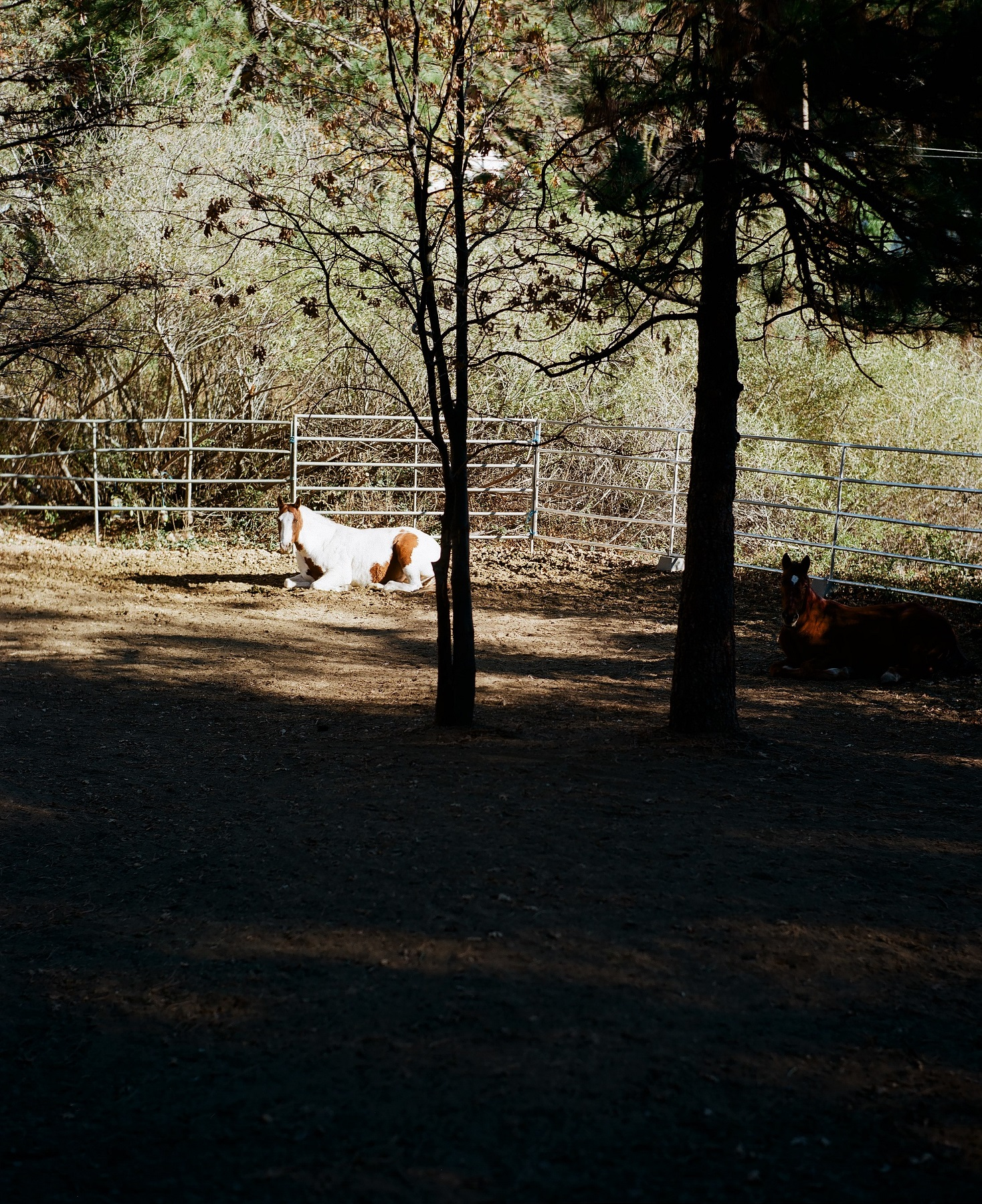 Crestline, California_Mamiya Super 23, 3.5f=100m_Kyle Everett Smith_13.jpg