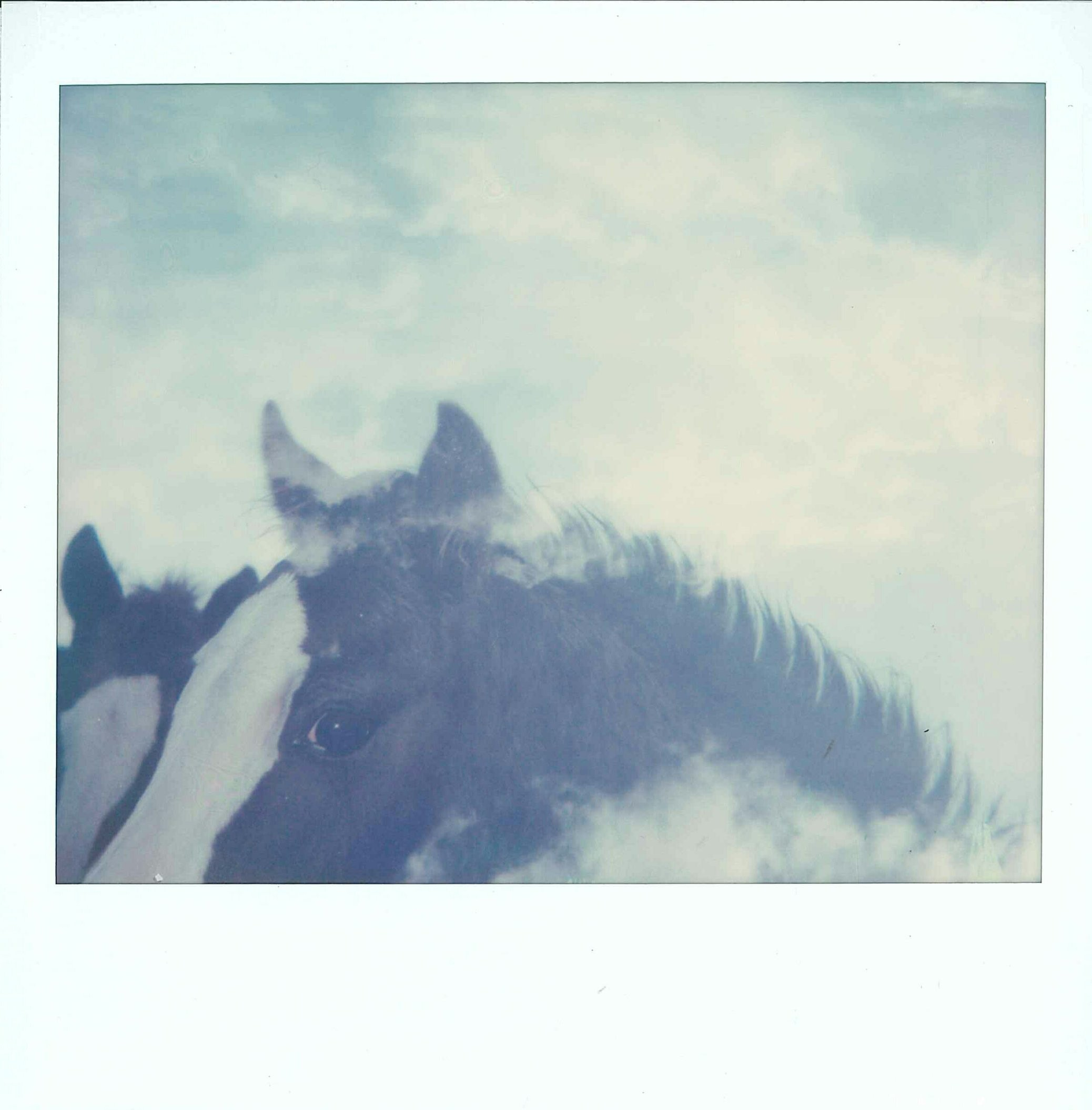 Horse Series | Spectra | Impossible Project film | Amanda Pendlebury