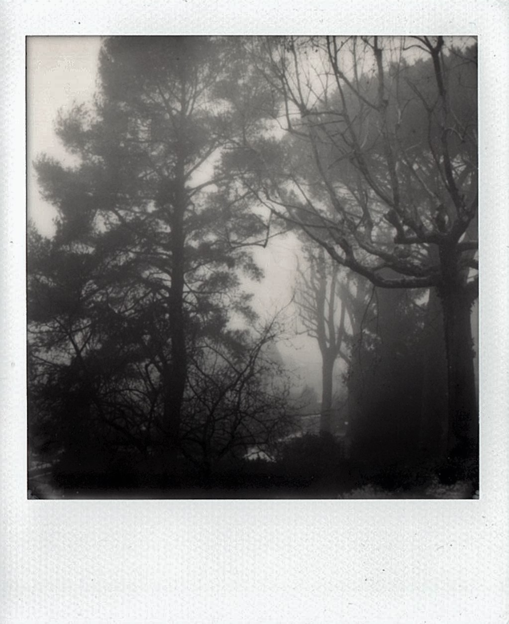 Untitled  | SX-70 | Polaroid Originals Black and White | Marina Inì