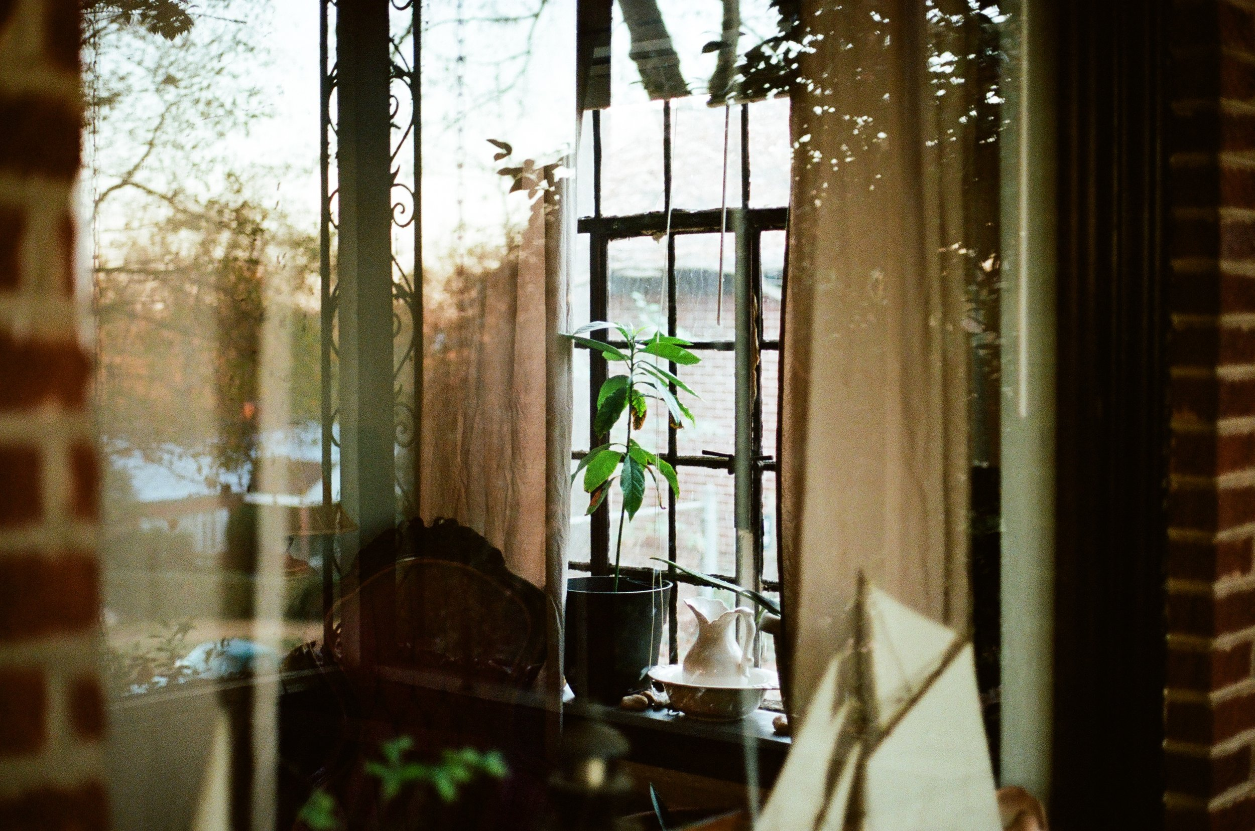 Looking In | Canon AE1 | 50mm | Zach Parks