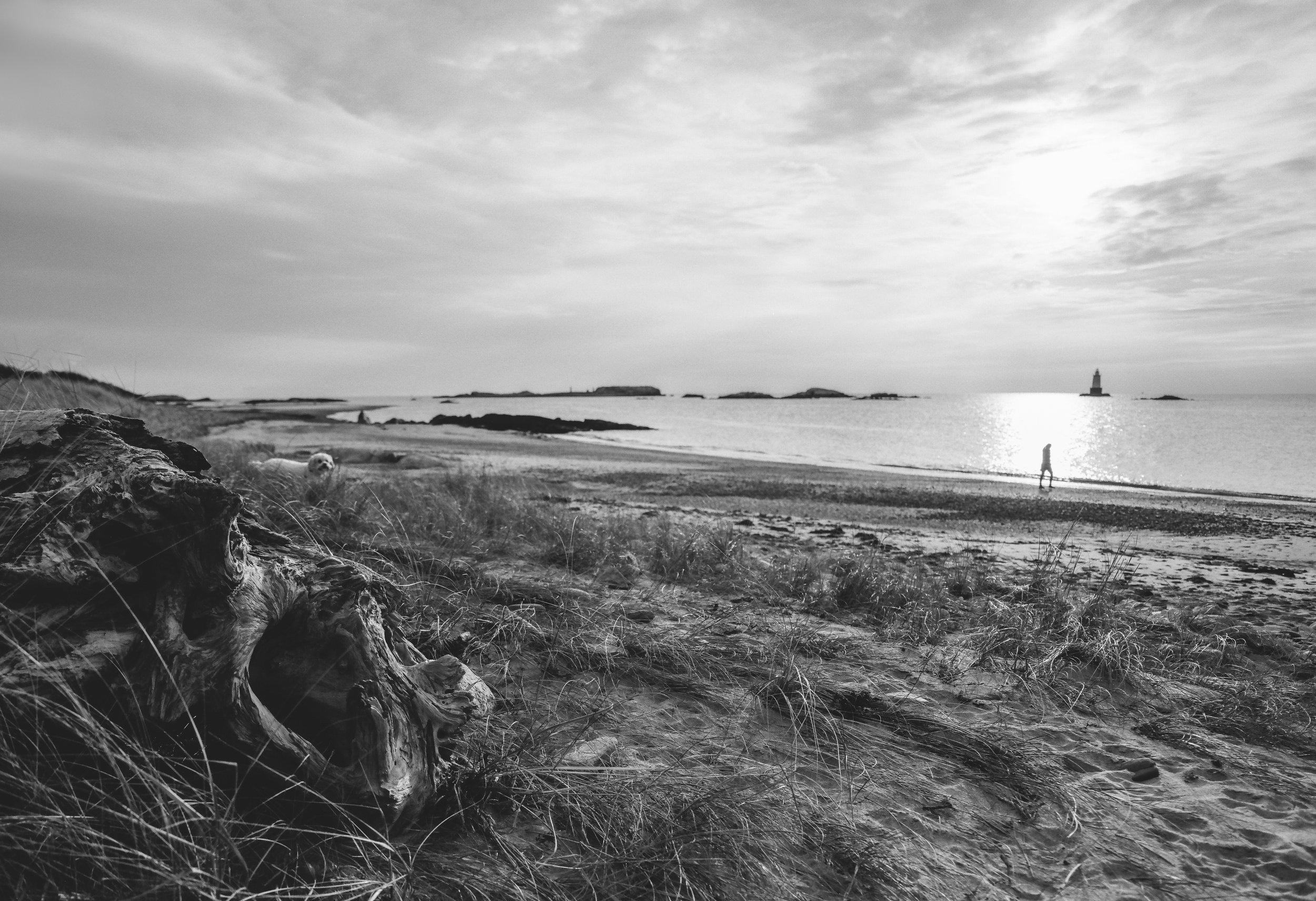 Driftwood at Sakonnet | Pentax 67 | 55mm | Acros | Louis Sousa