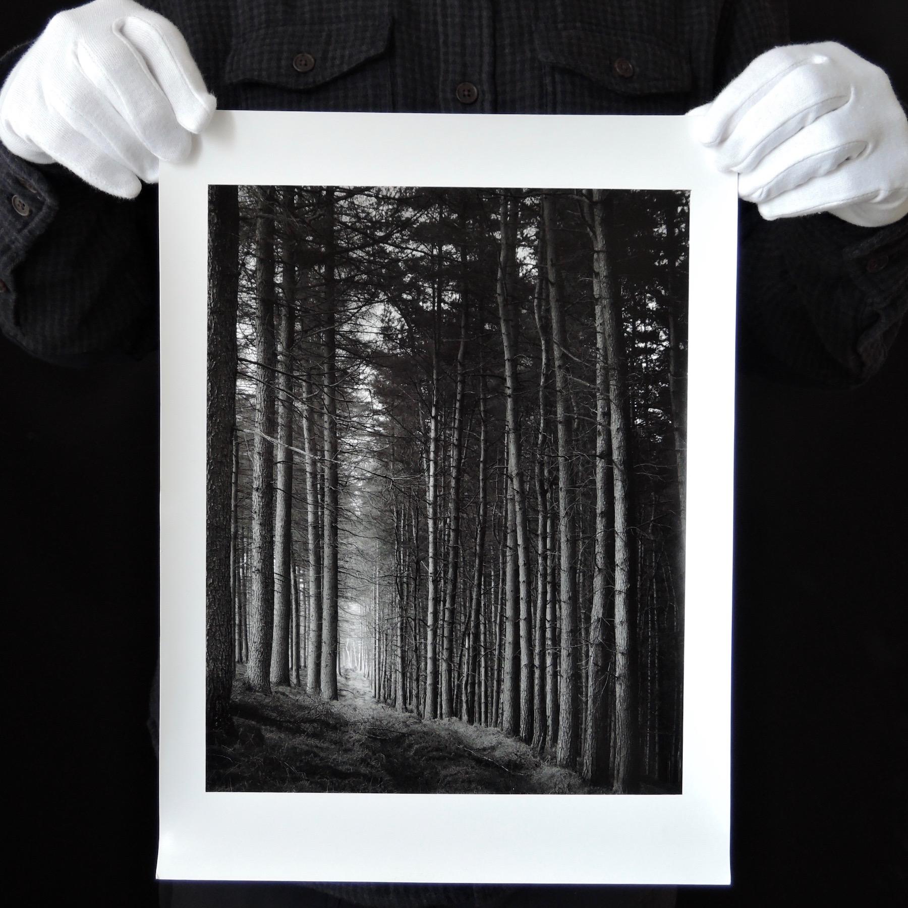 Paul Hart   Portal   Arca Swiss 5x4 300 mm