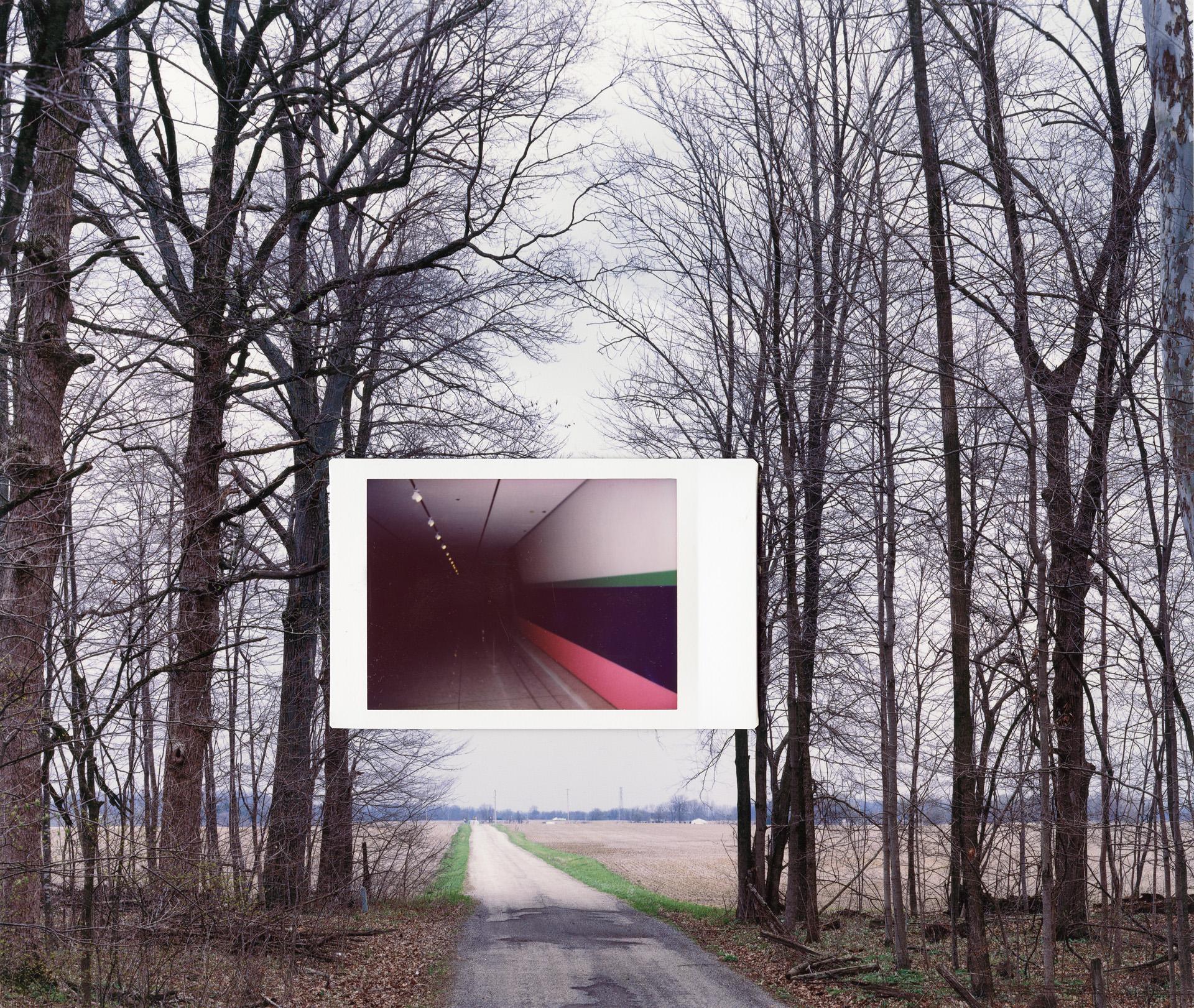 Road Through Trees | John Sanderson