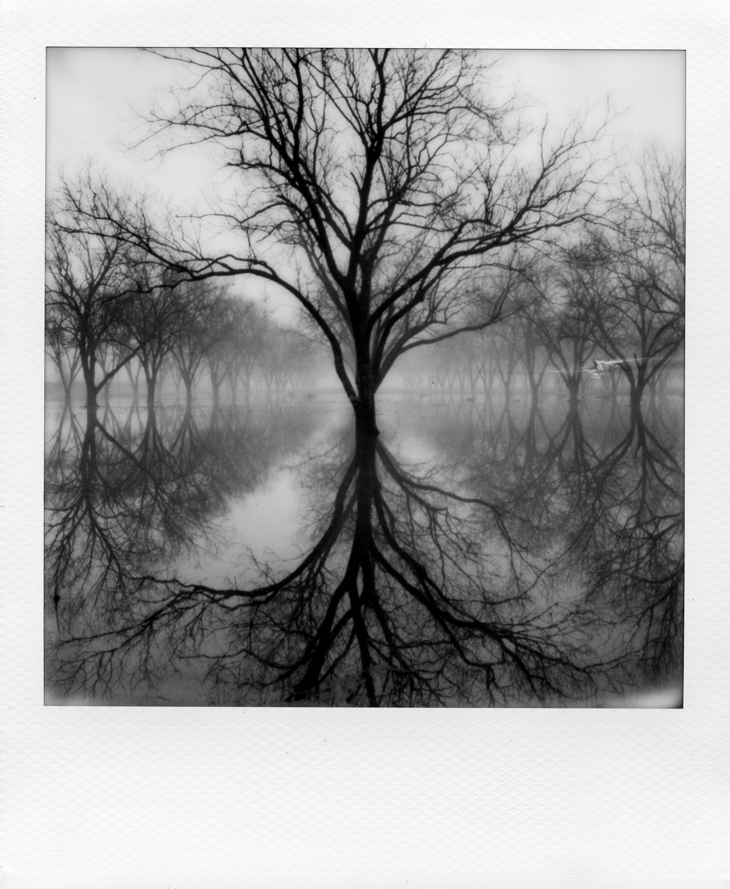 Pecans | Polaroid SX70 | Michael Mooney