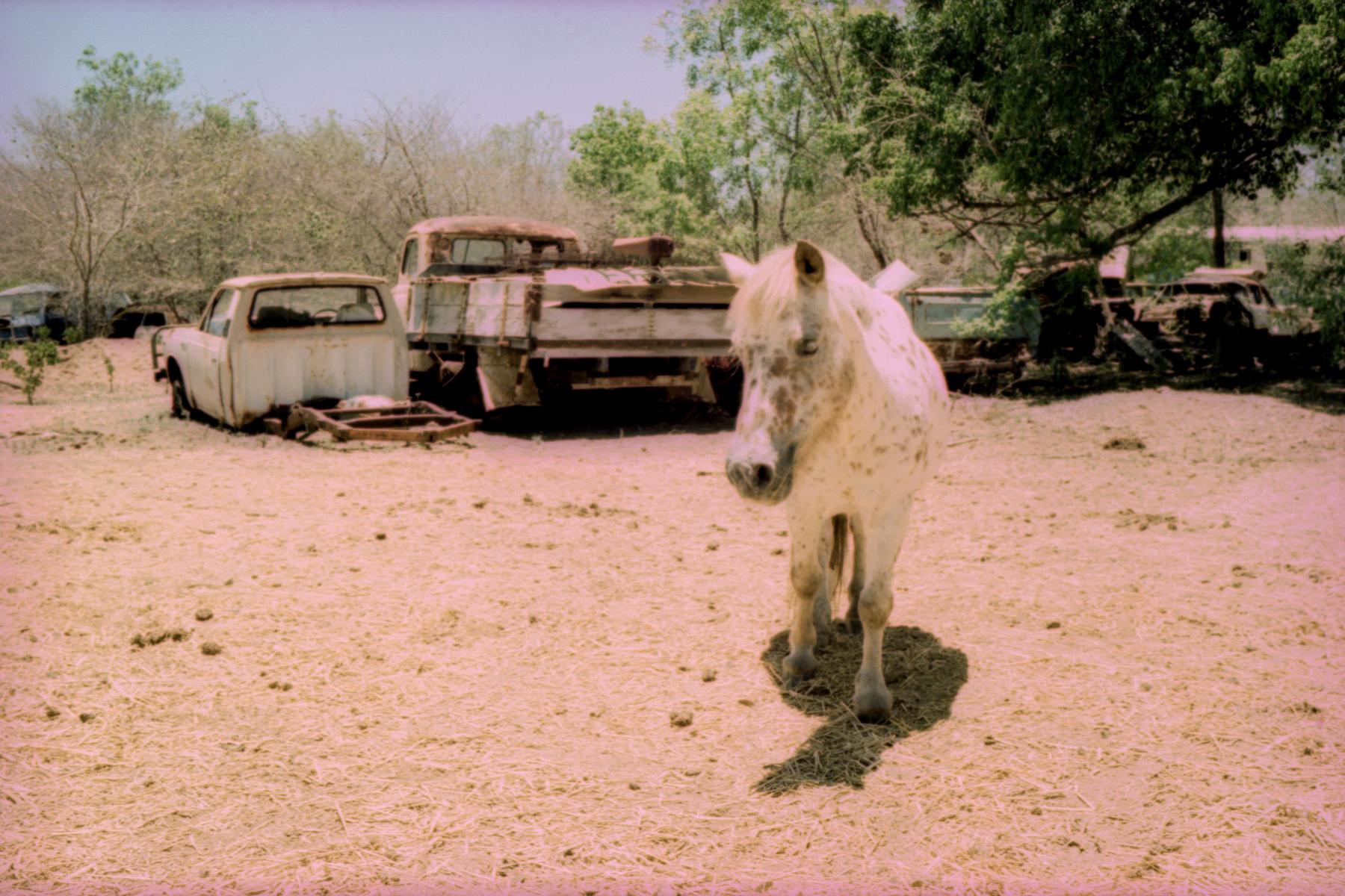 Junkyard Pony   Leica M3   E100 in C41   Greg Williamson