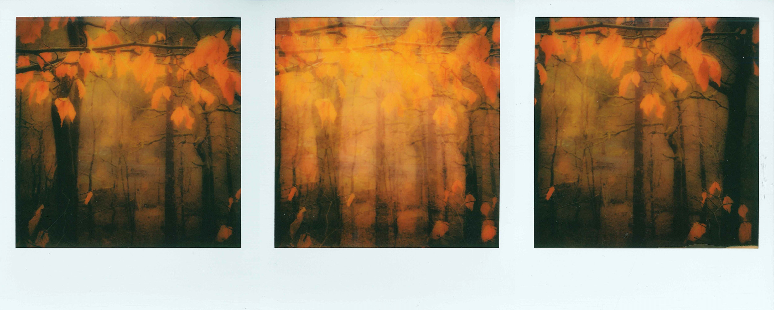 Untitled Triptych | Impossible Project Instant Lab | Polaroid Originals I-Type Color Film | Amanda Pendlebury