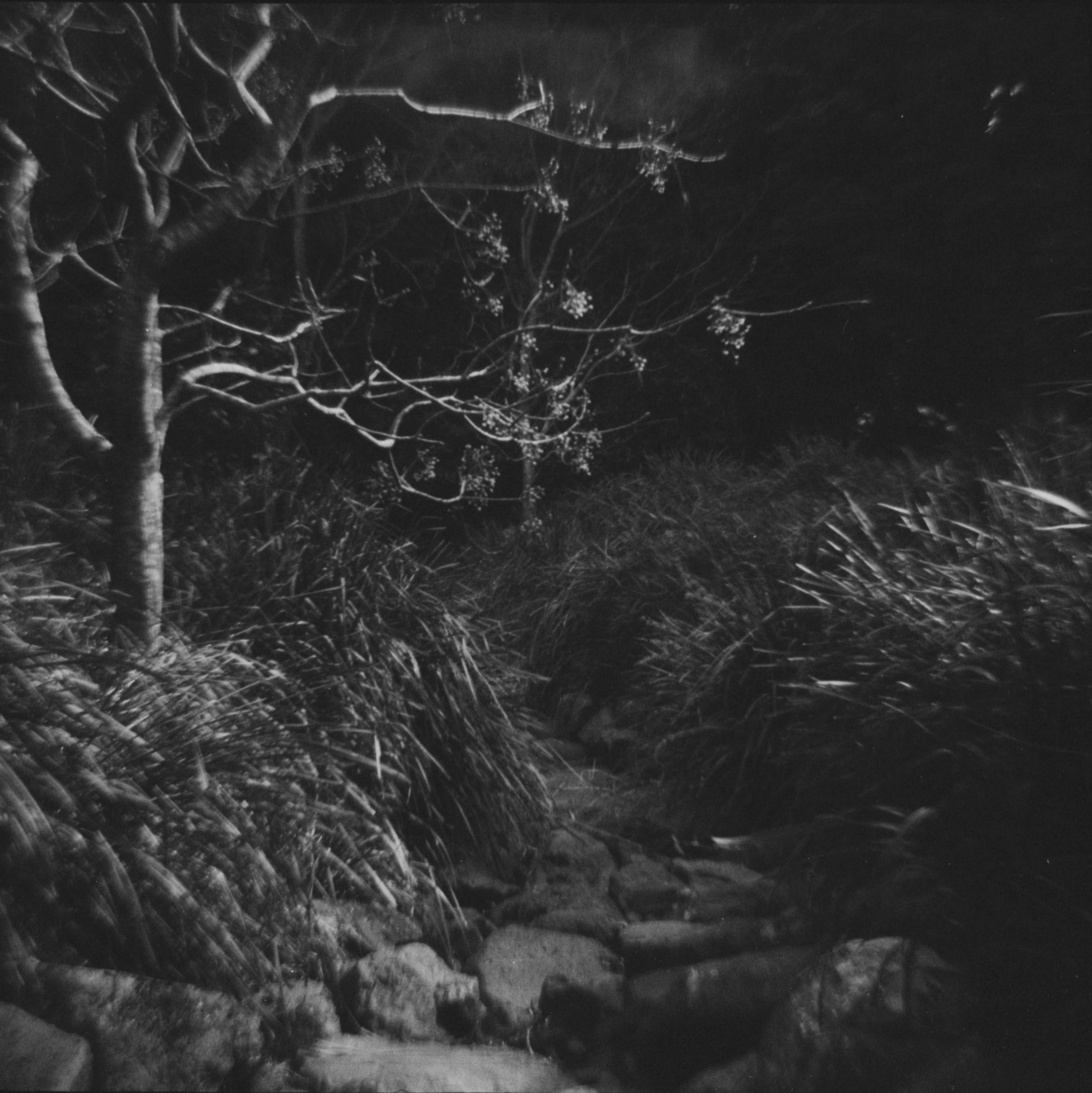 The Creek | Diana F | Bilby Moorhouse